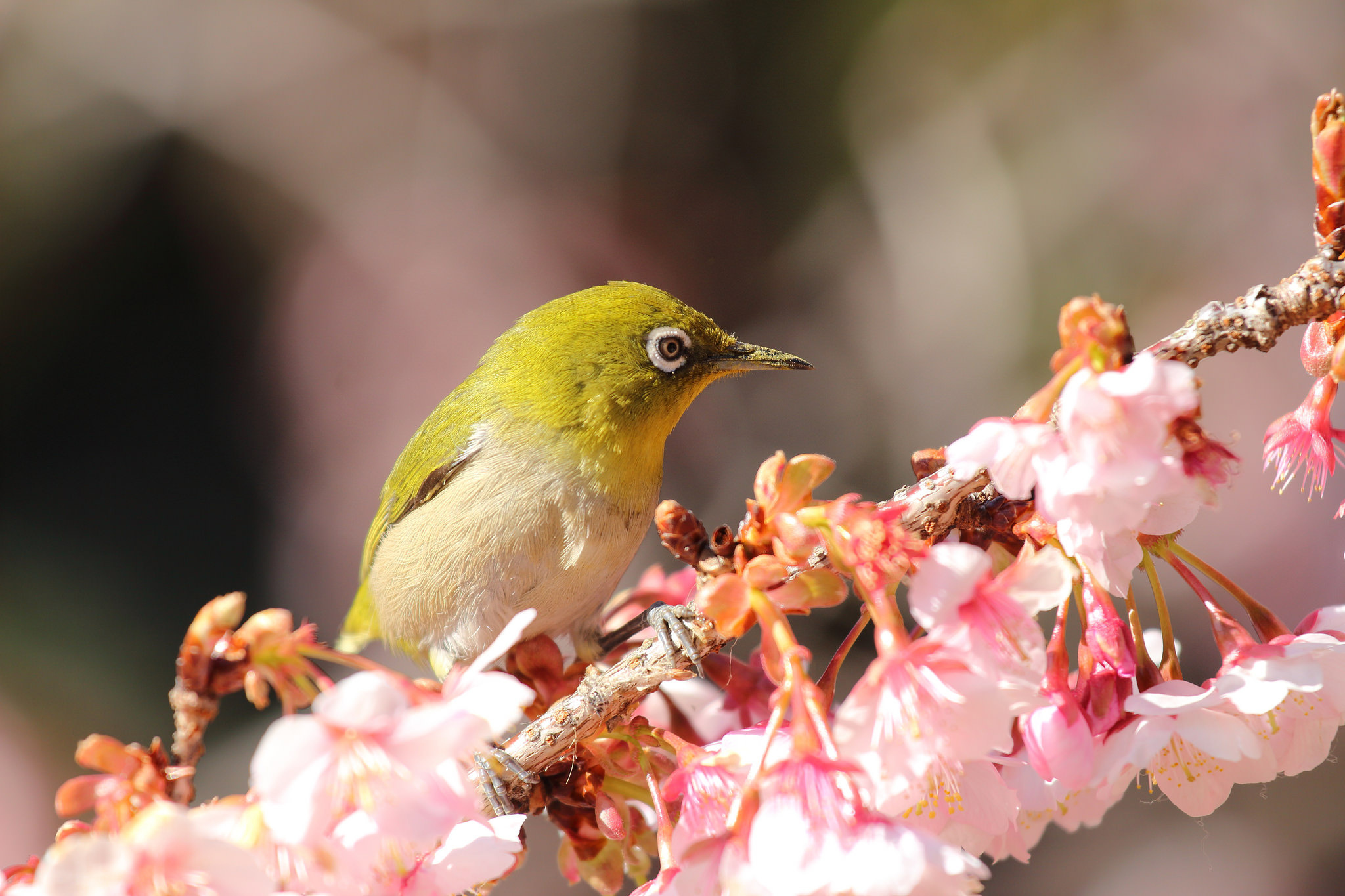 Картинки птица с цветами