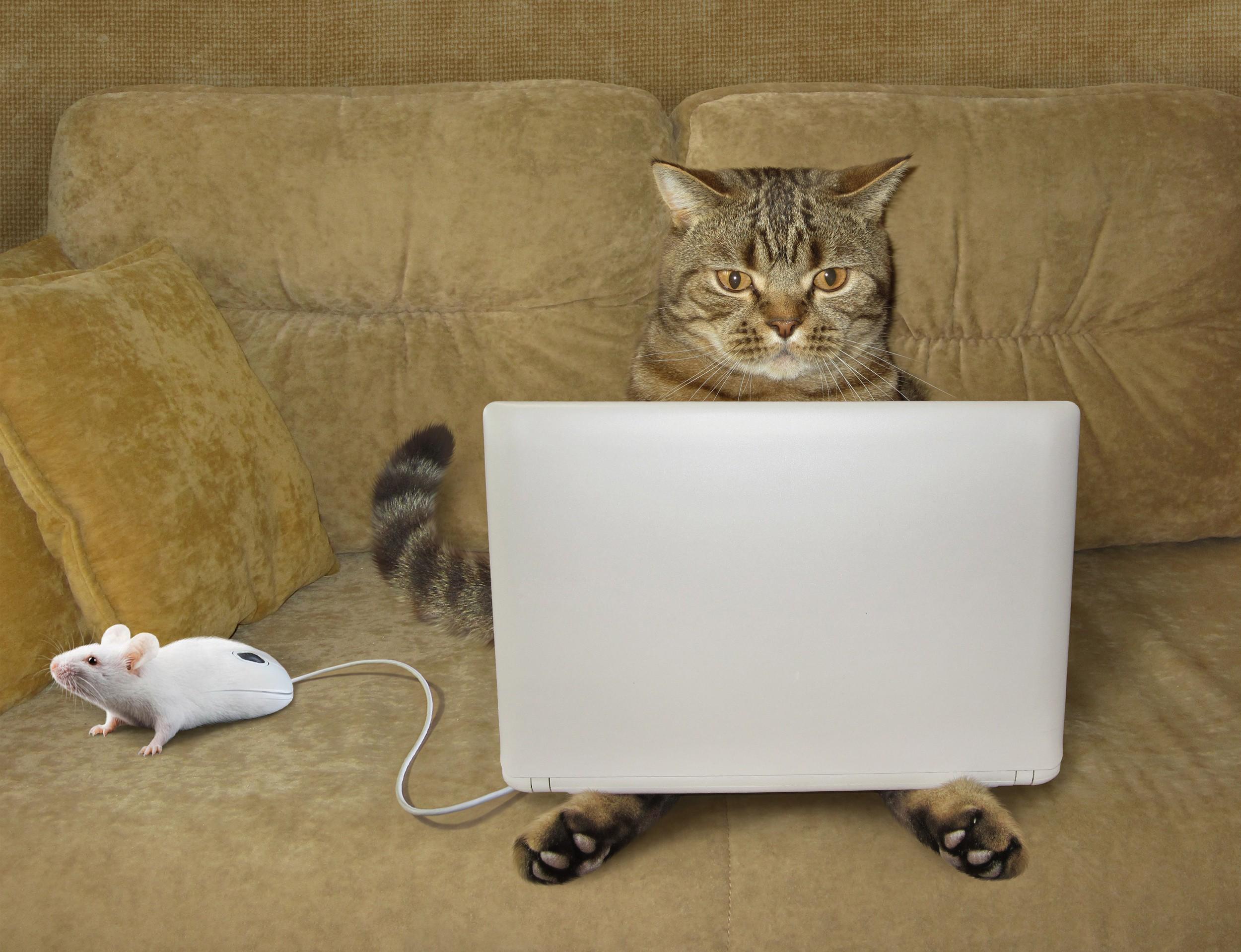 Обои рабочего стола кошки за пк
