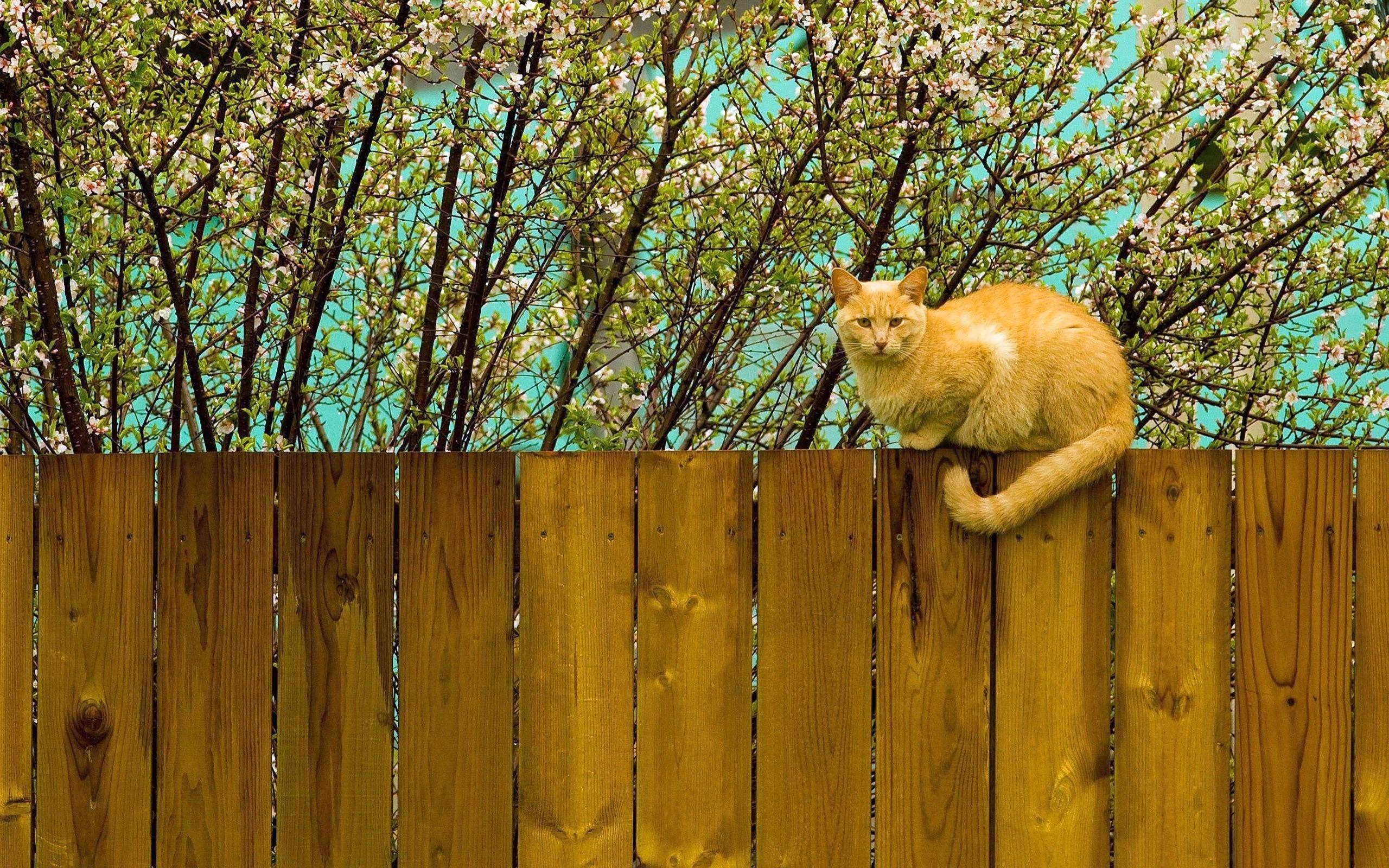 забор для животных картинки поздравлений