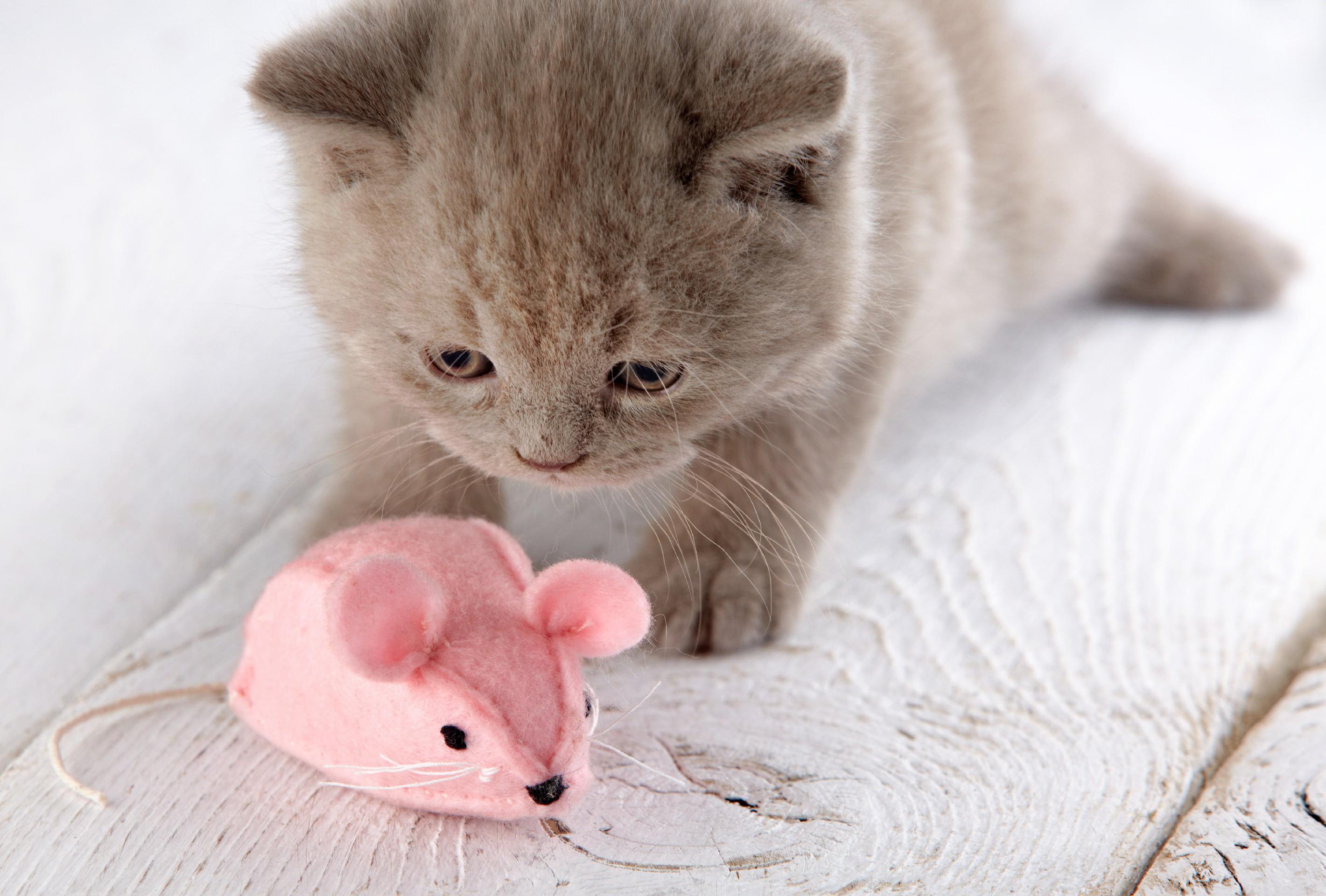 Мышонок и котенок картинки дачу