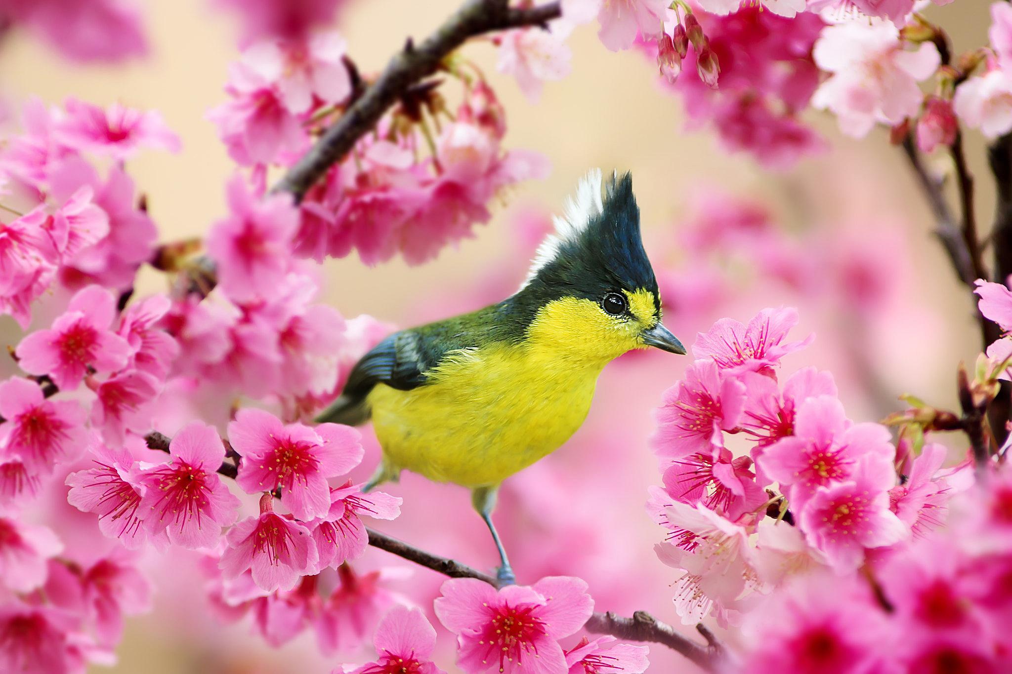 картинки красочные с весной фотографий получил