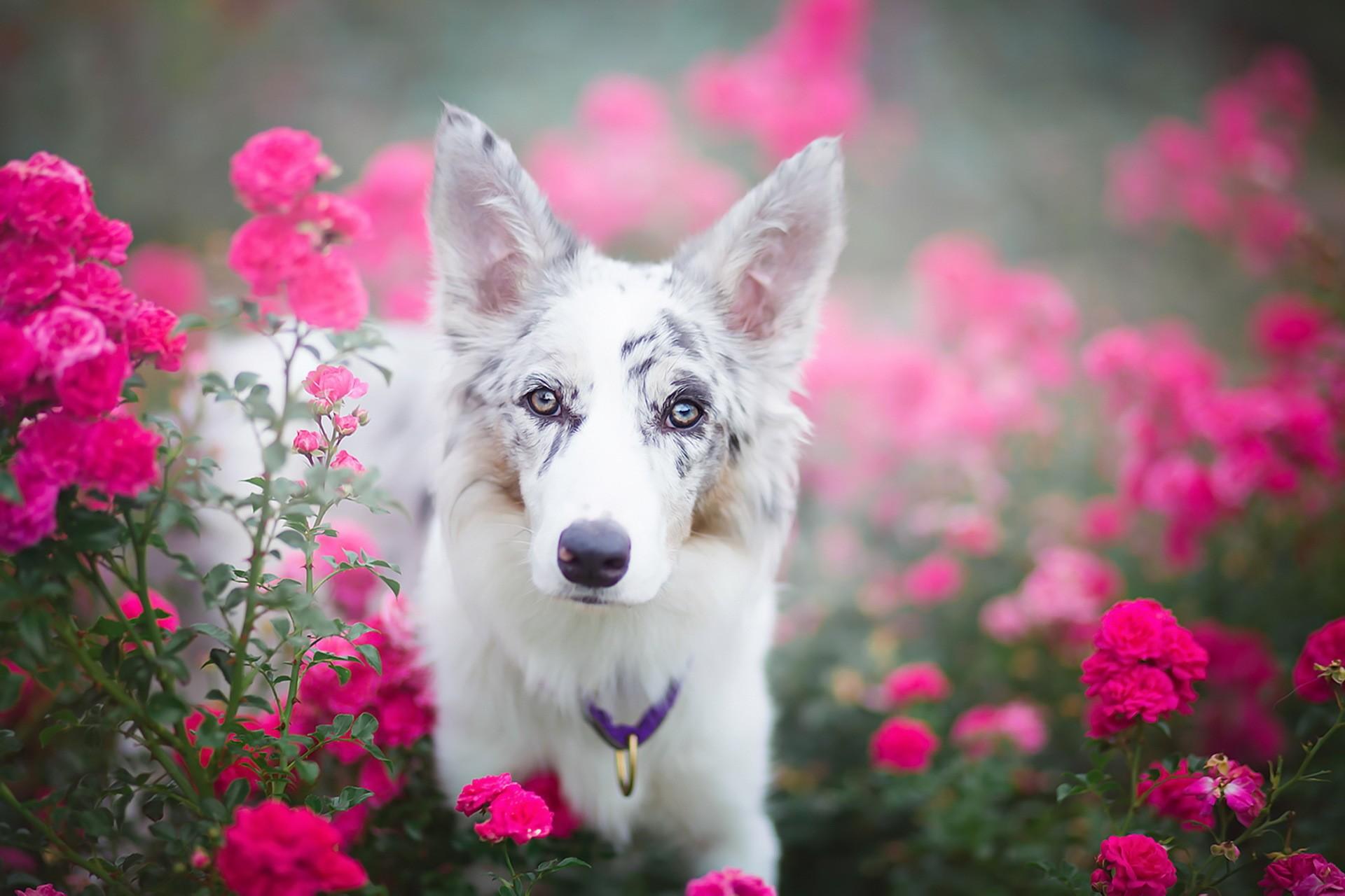Картинки красивые цветные щенята