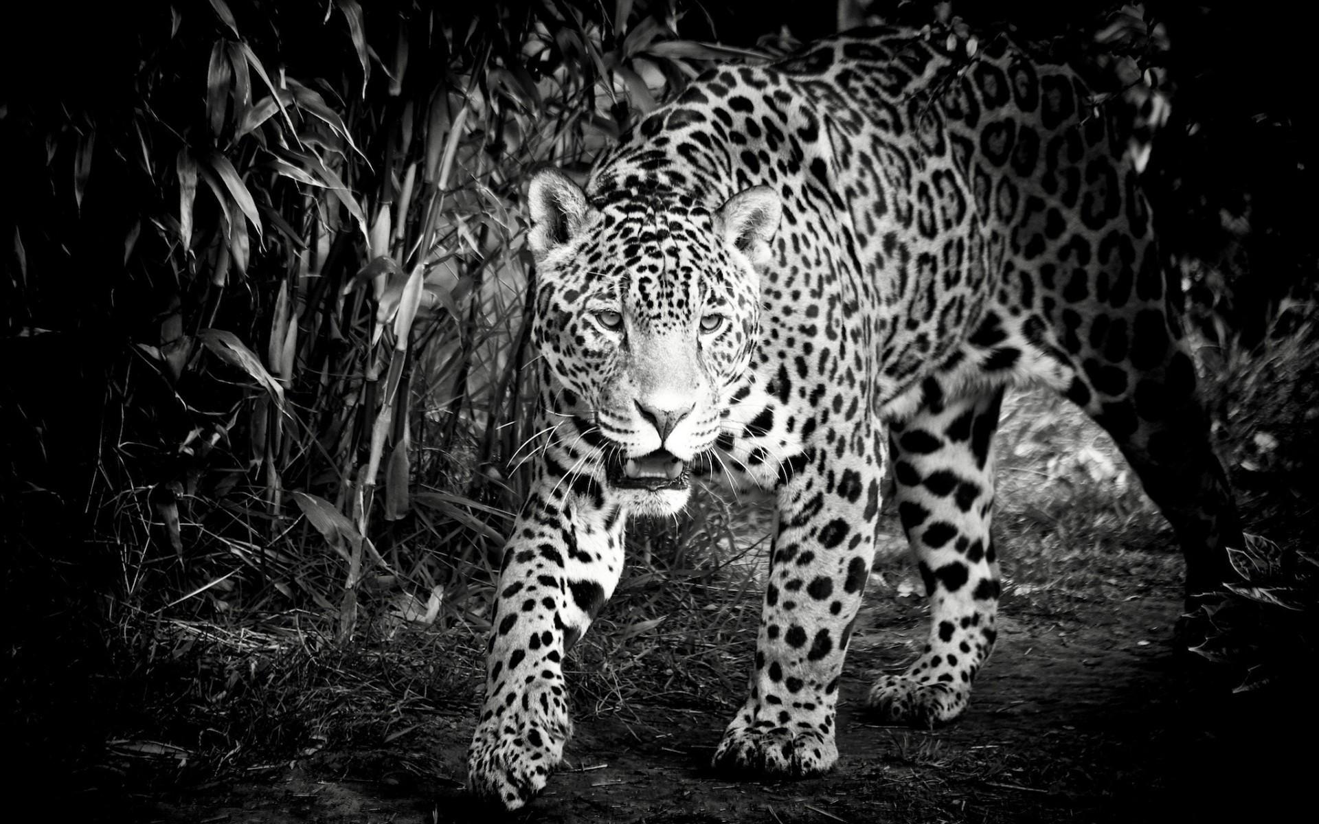 Самые классные черно белые картинки