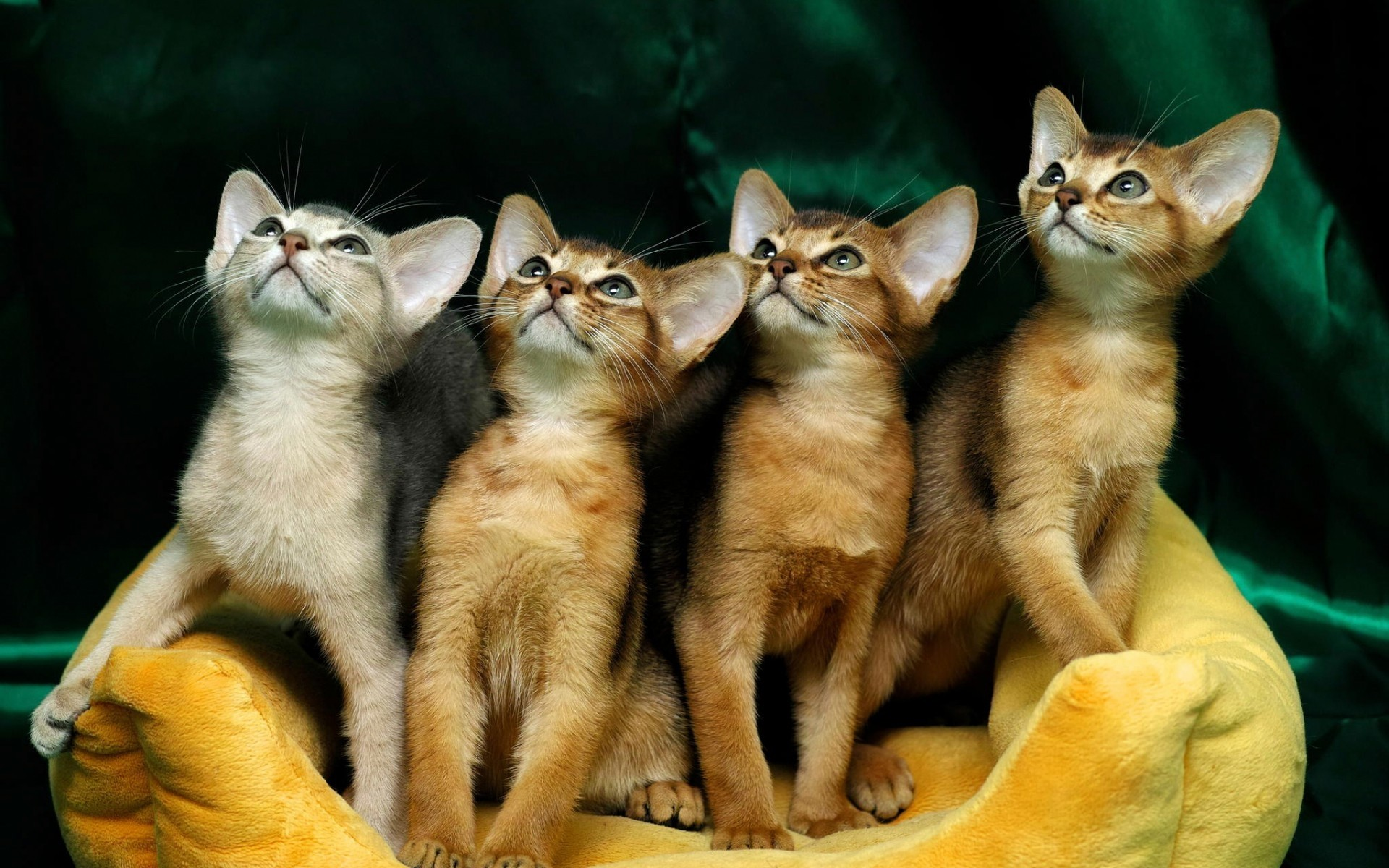 смотрю картинки с котиками