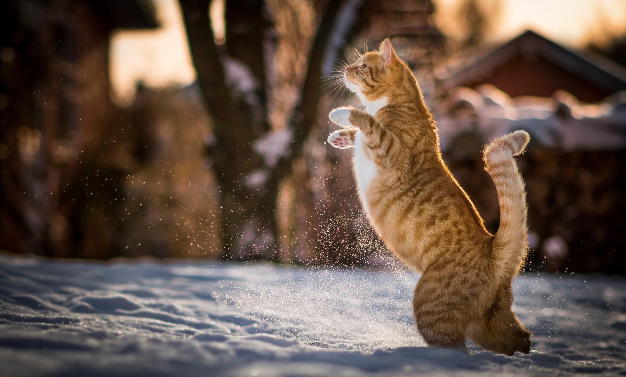 благоустройства зима котики картинки на рабочий стол скоро