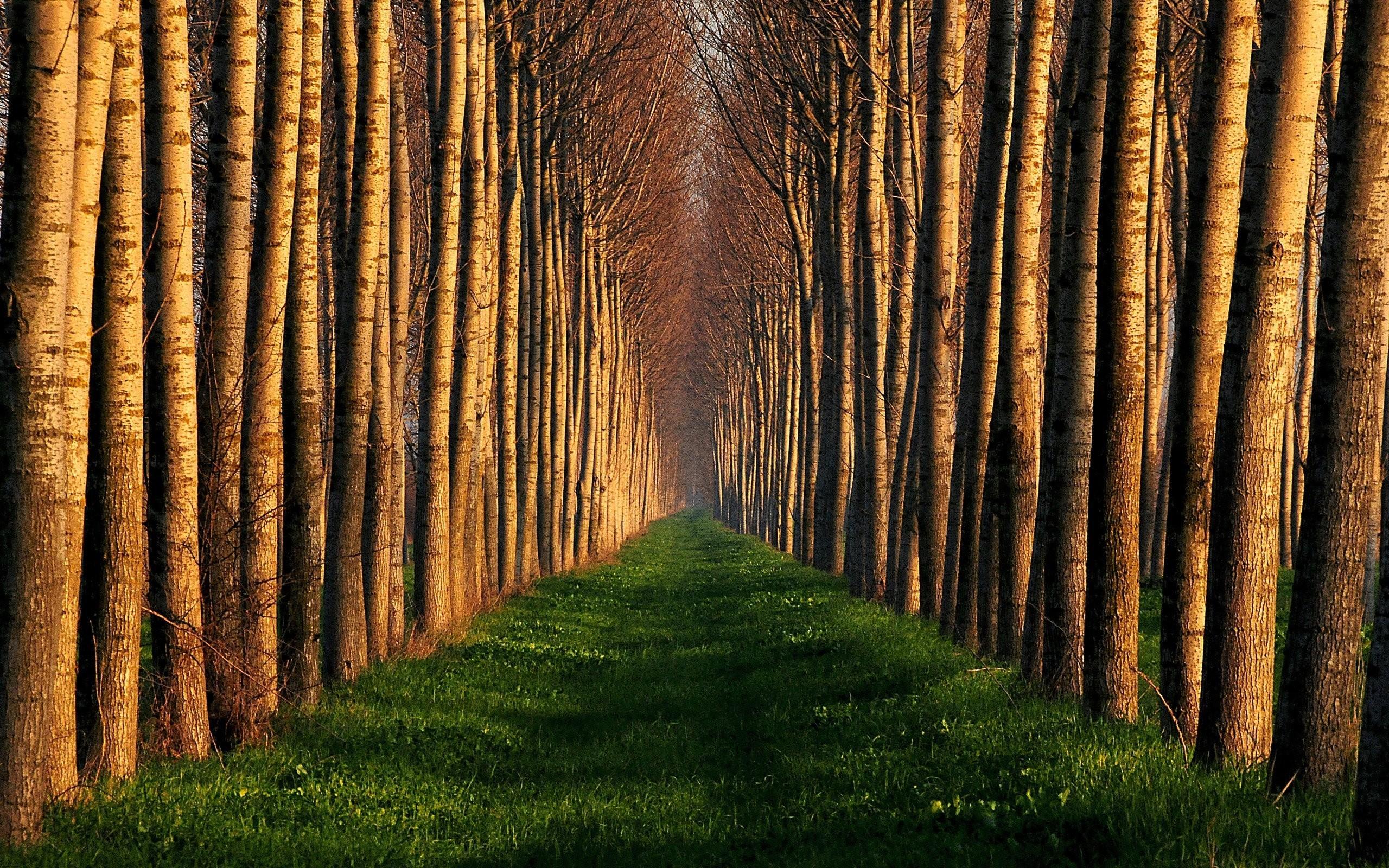 Картинки лес необычный