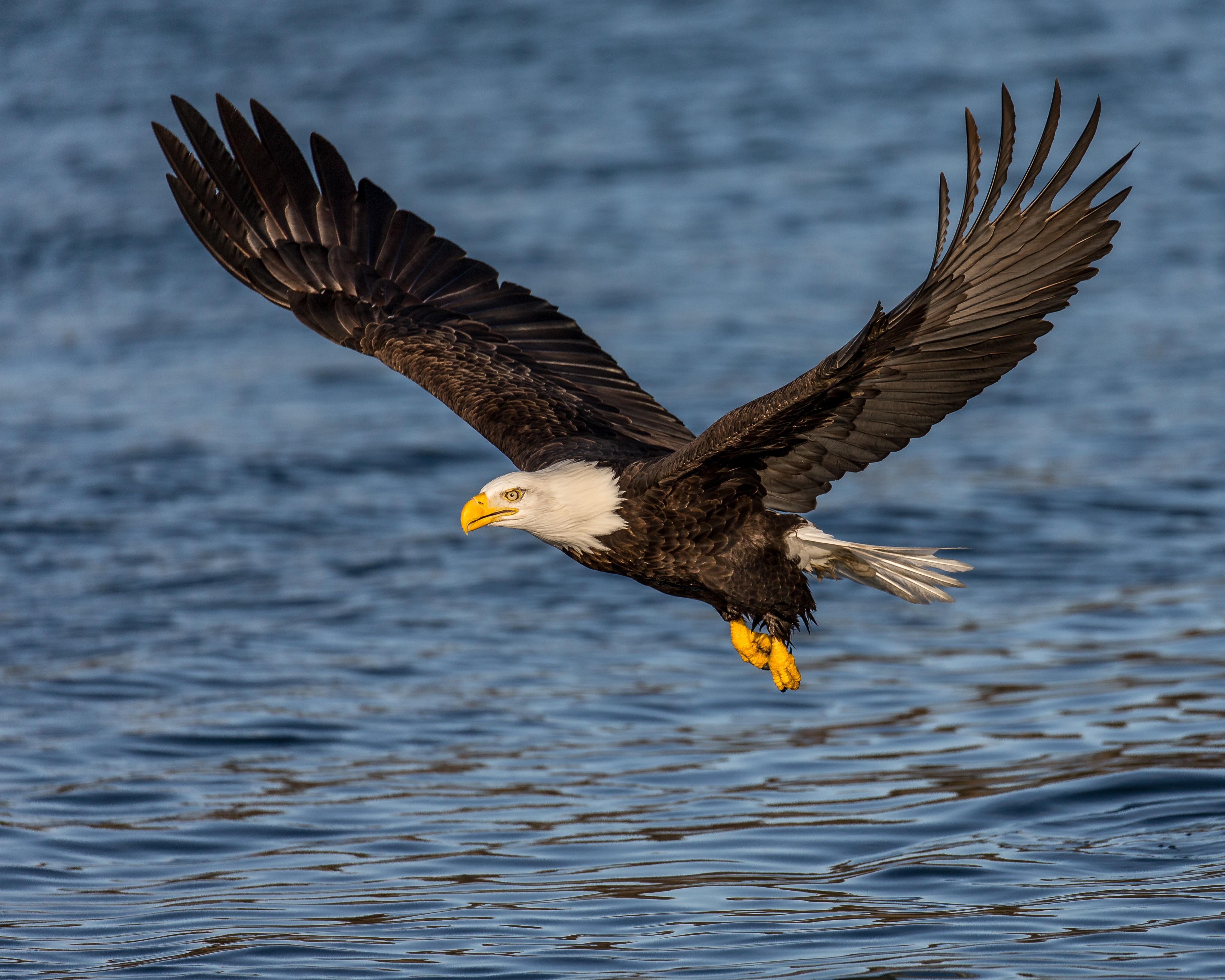 фото и картинки парящего орла вишенкой смайлики картинки