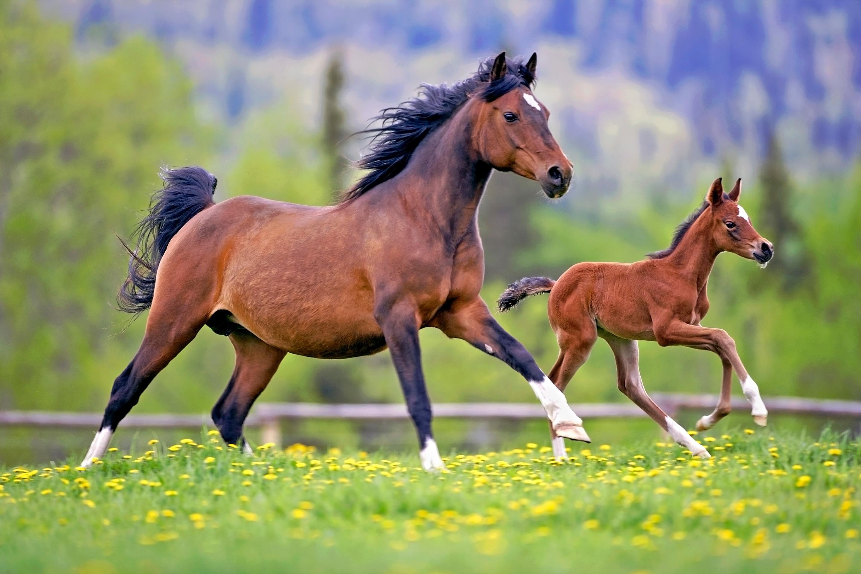 Обои лошадь, жеребёнок. Животные foto 10