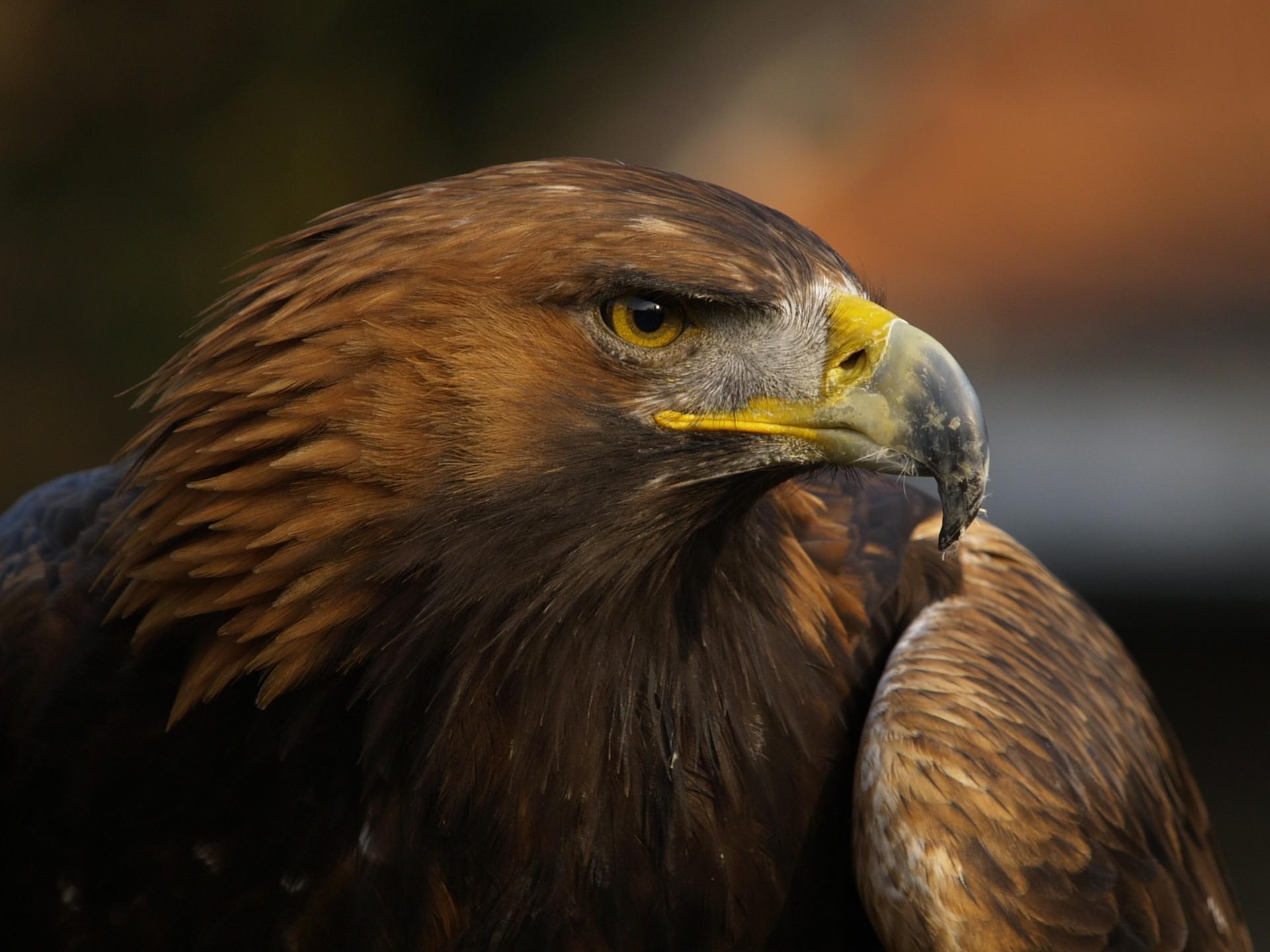 Орел картинки в хорошем качестве