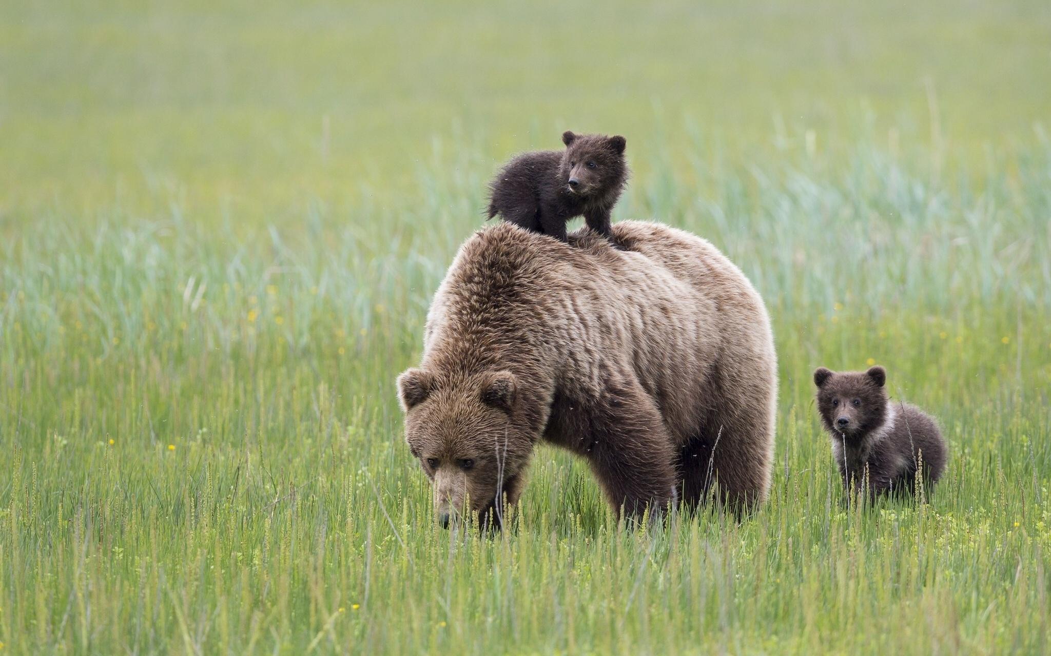 именно животное символ россии картинки судьба