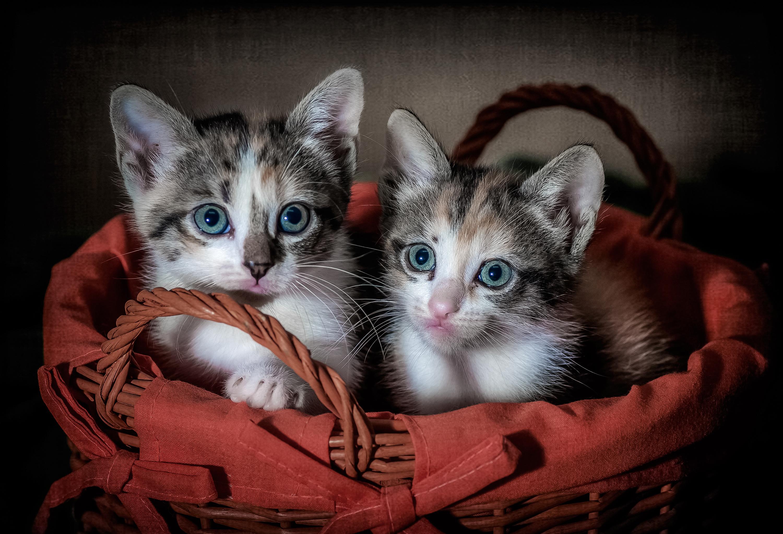 Красивые кролики картинки на весь экран спокойных ночей