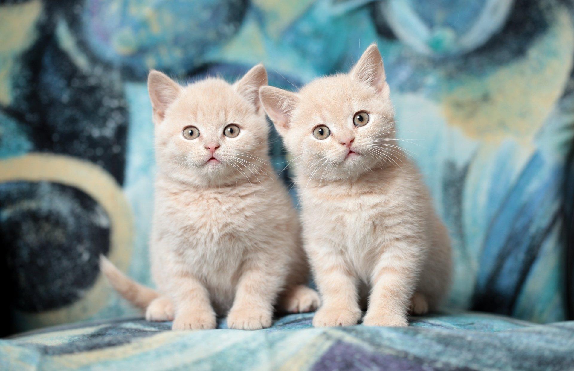 картинки на рабочий стол с котятами что