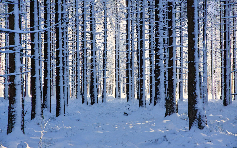 Фон леса картинки зимой