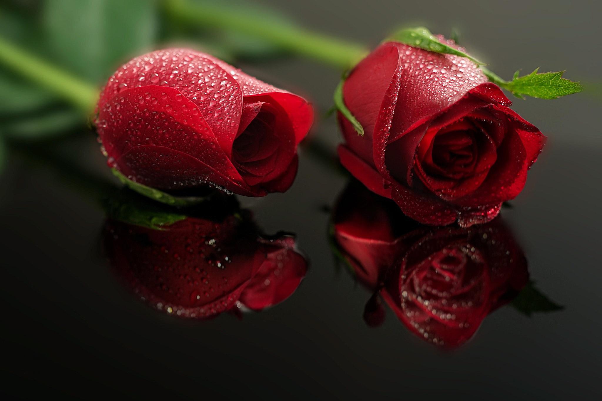 Две розы картинка фото