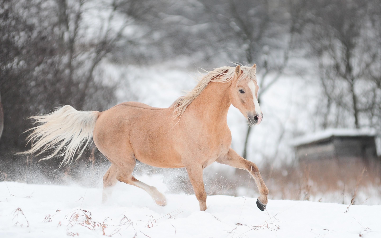 обои для рабочего стола зимние лошади № 465245  скачать