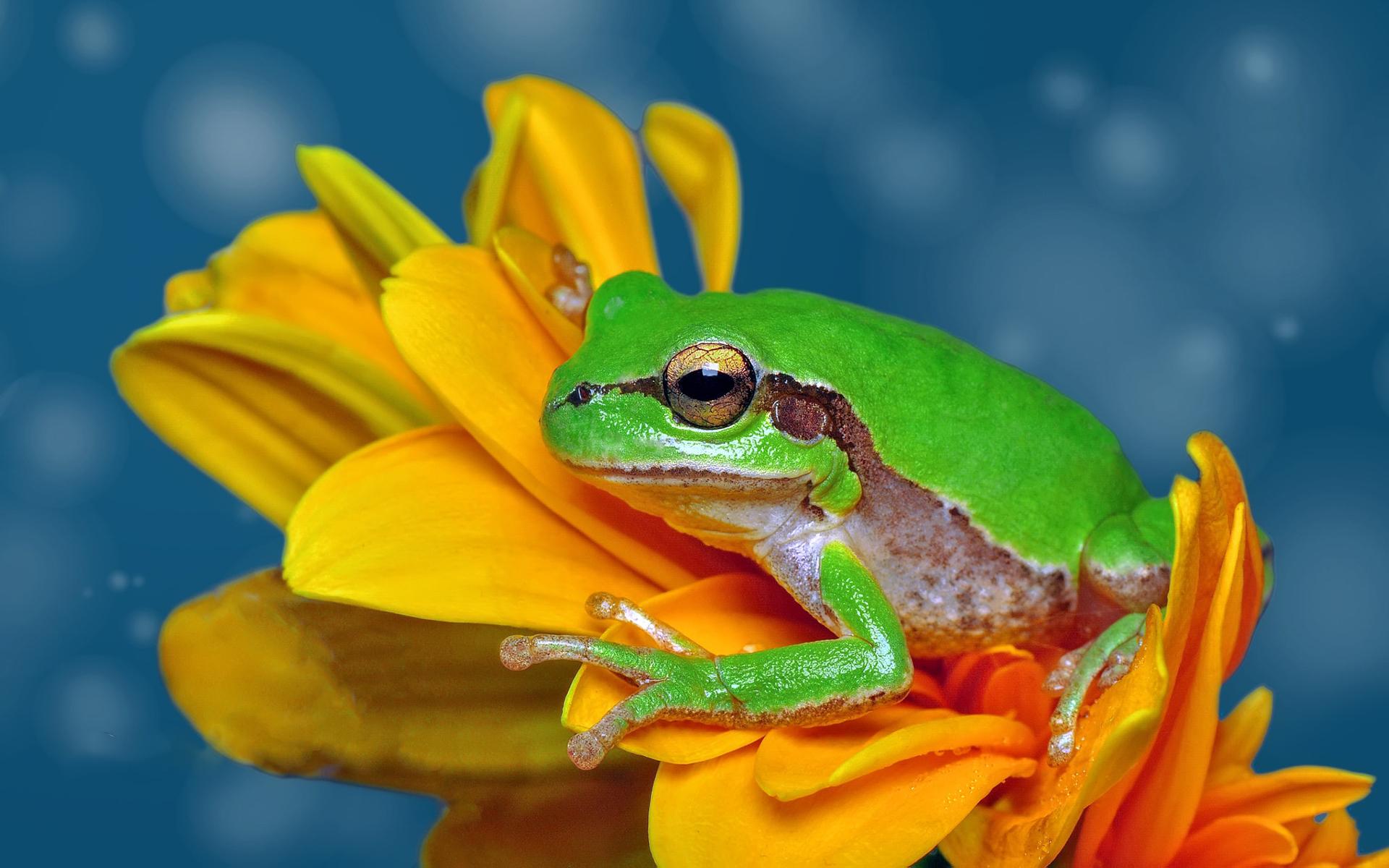 лягушонок красивая картинка поделитесь своей