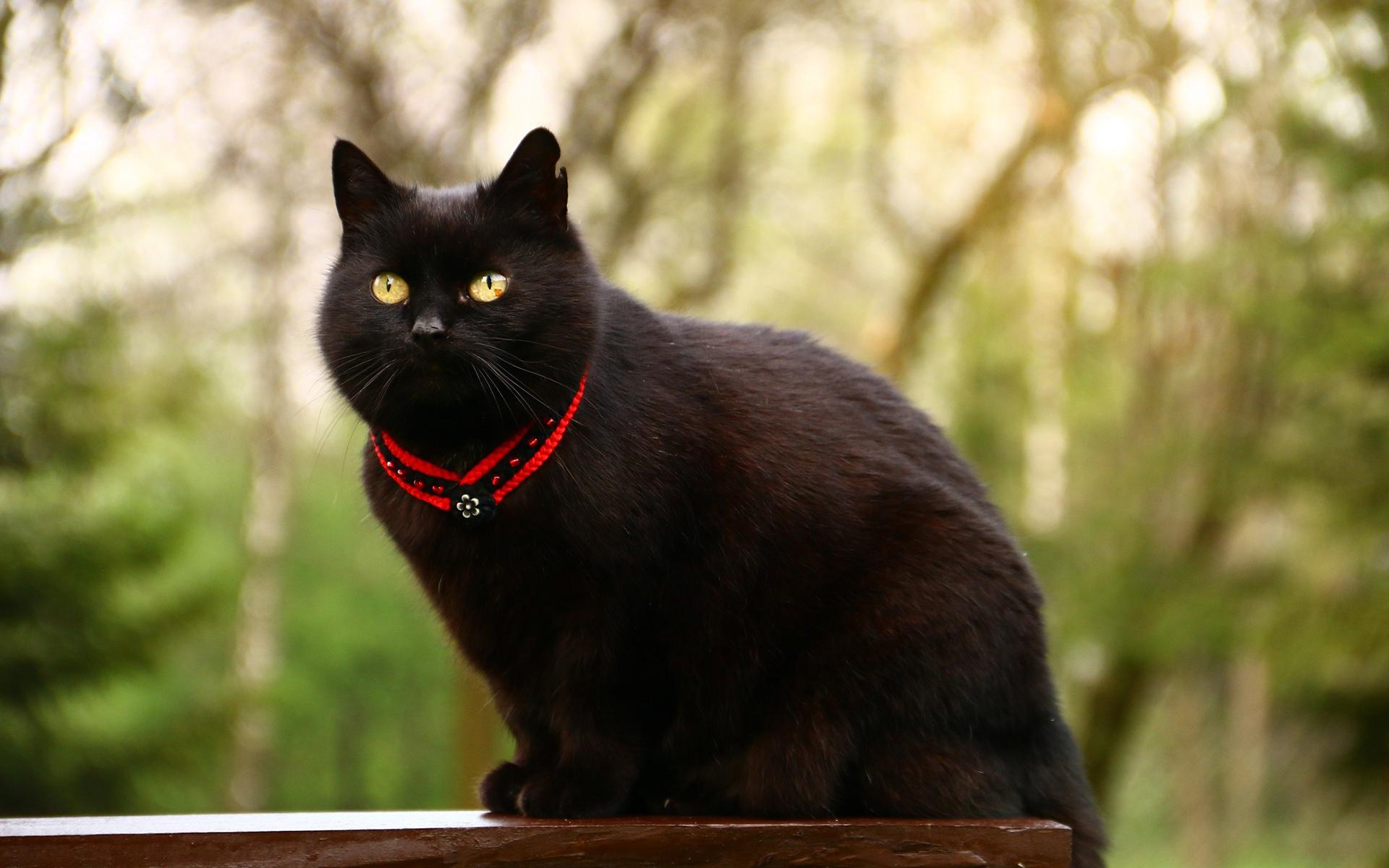 Картинка с черным котиком