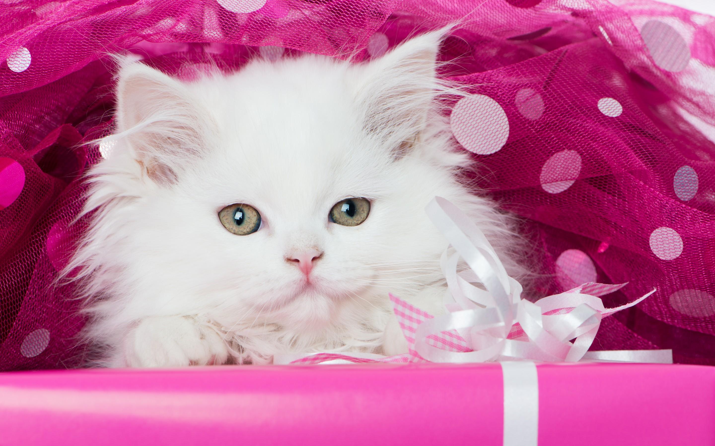 котята картинки для обложки дни рождения другие