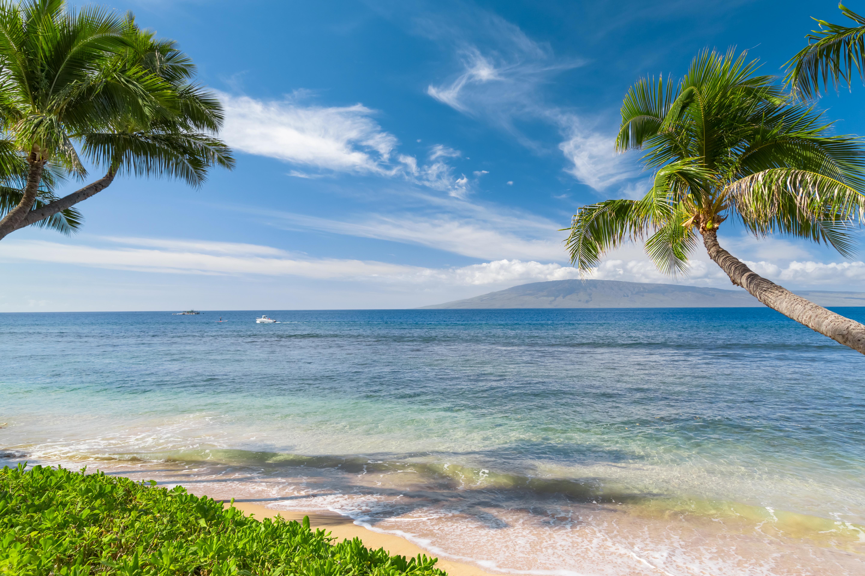 Картинка на стол море пляж пальмы