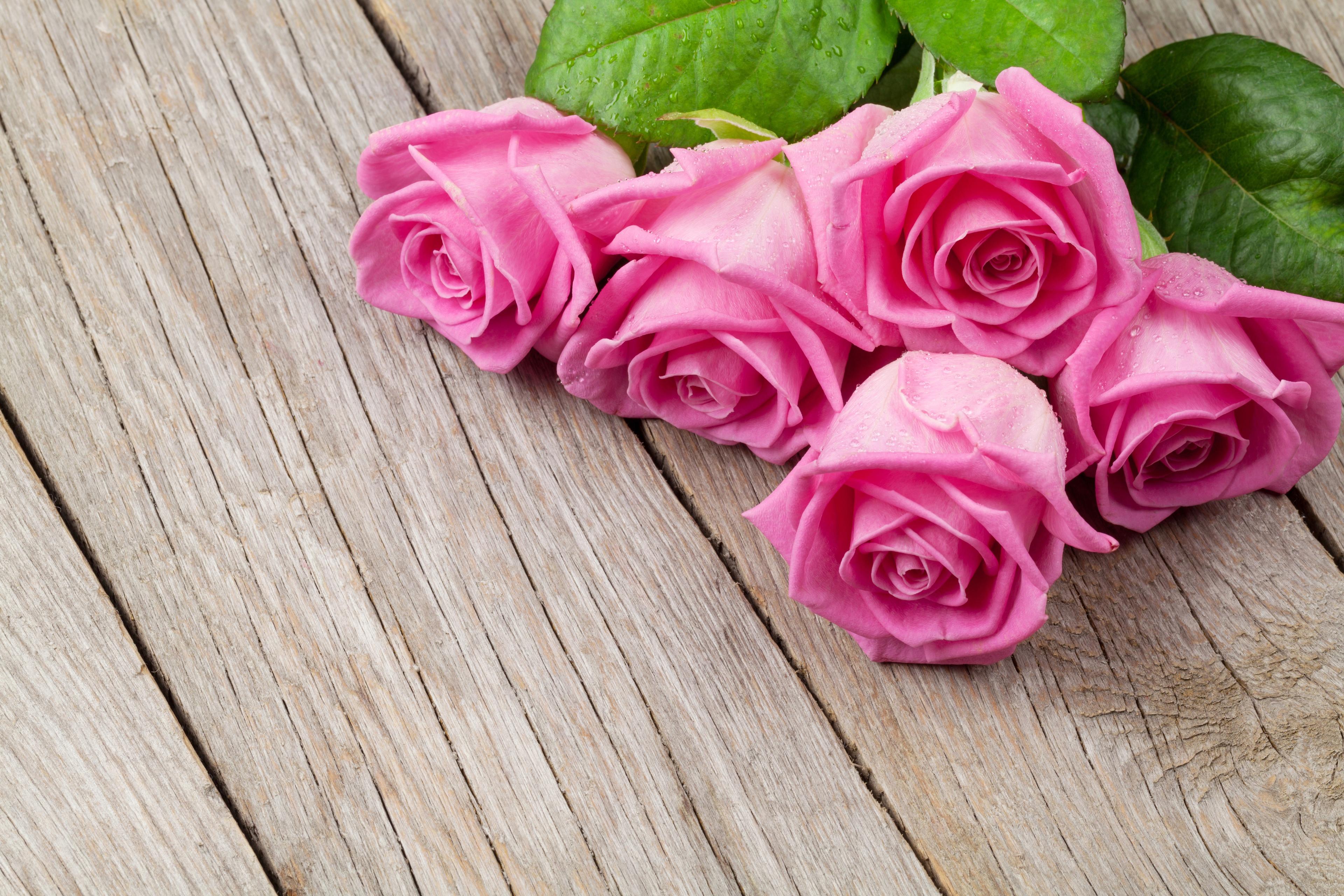 фильтрацией цветы лежат картинки березонька