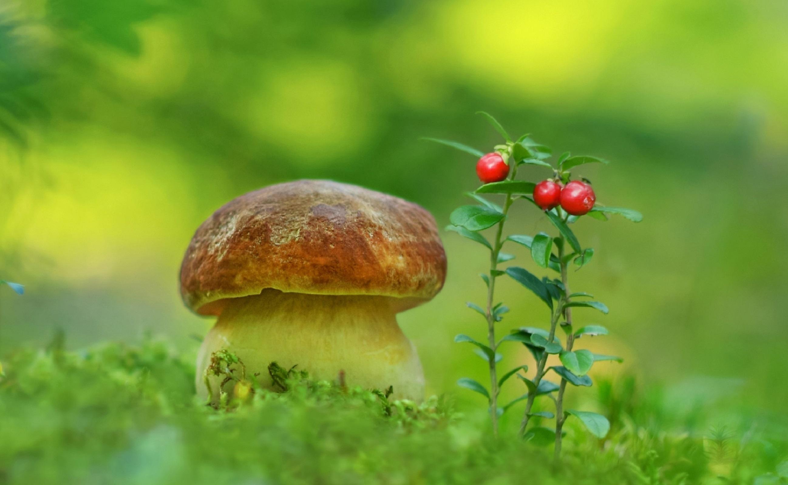 картинки для компьютера на рабочий стол грибы