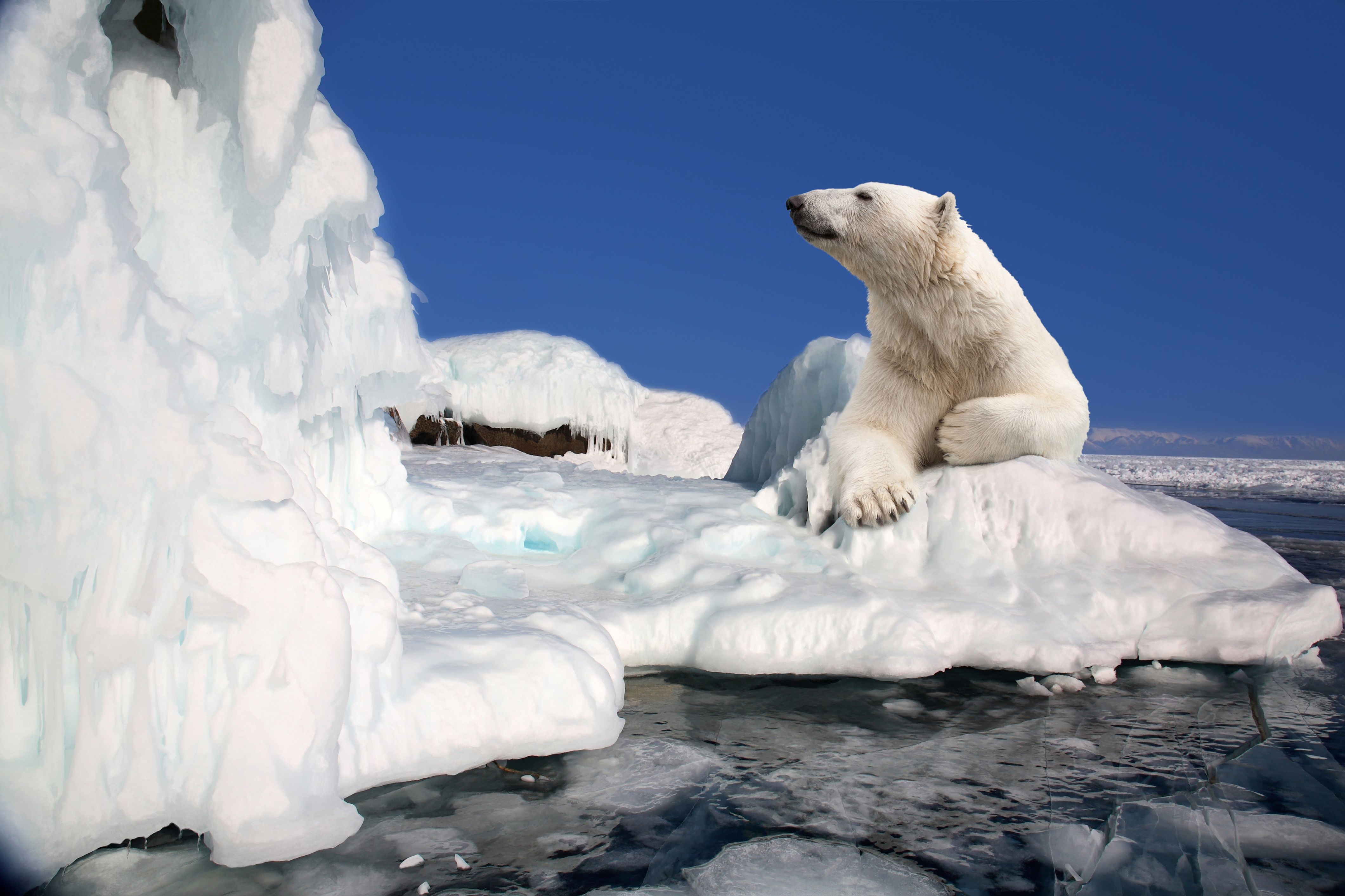 Обои льдина, Медведь, мишка, один. Разное foto 14