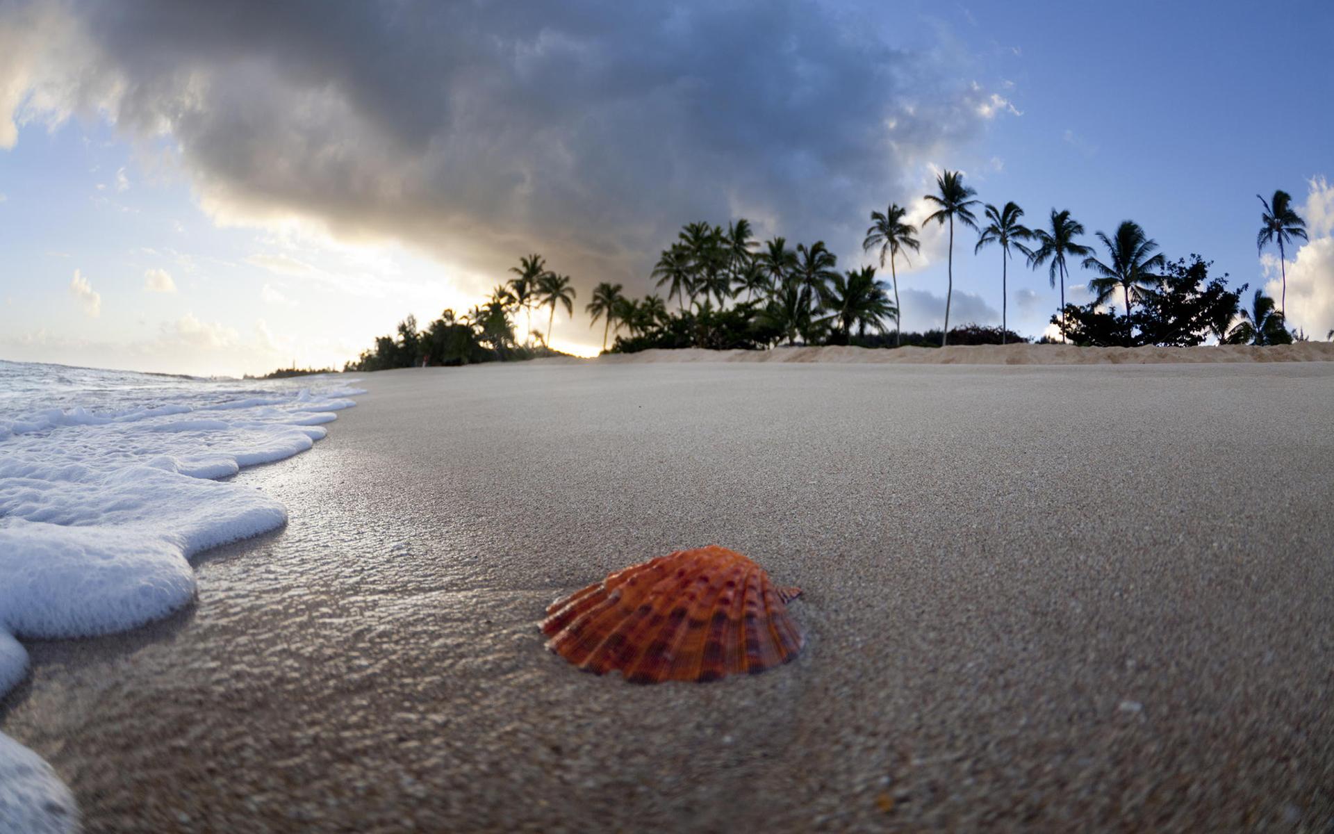 подойдут как картинки песок вода пальмы сможет выехать вам