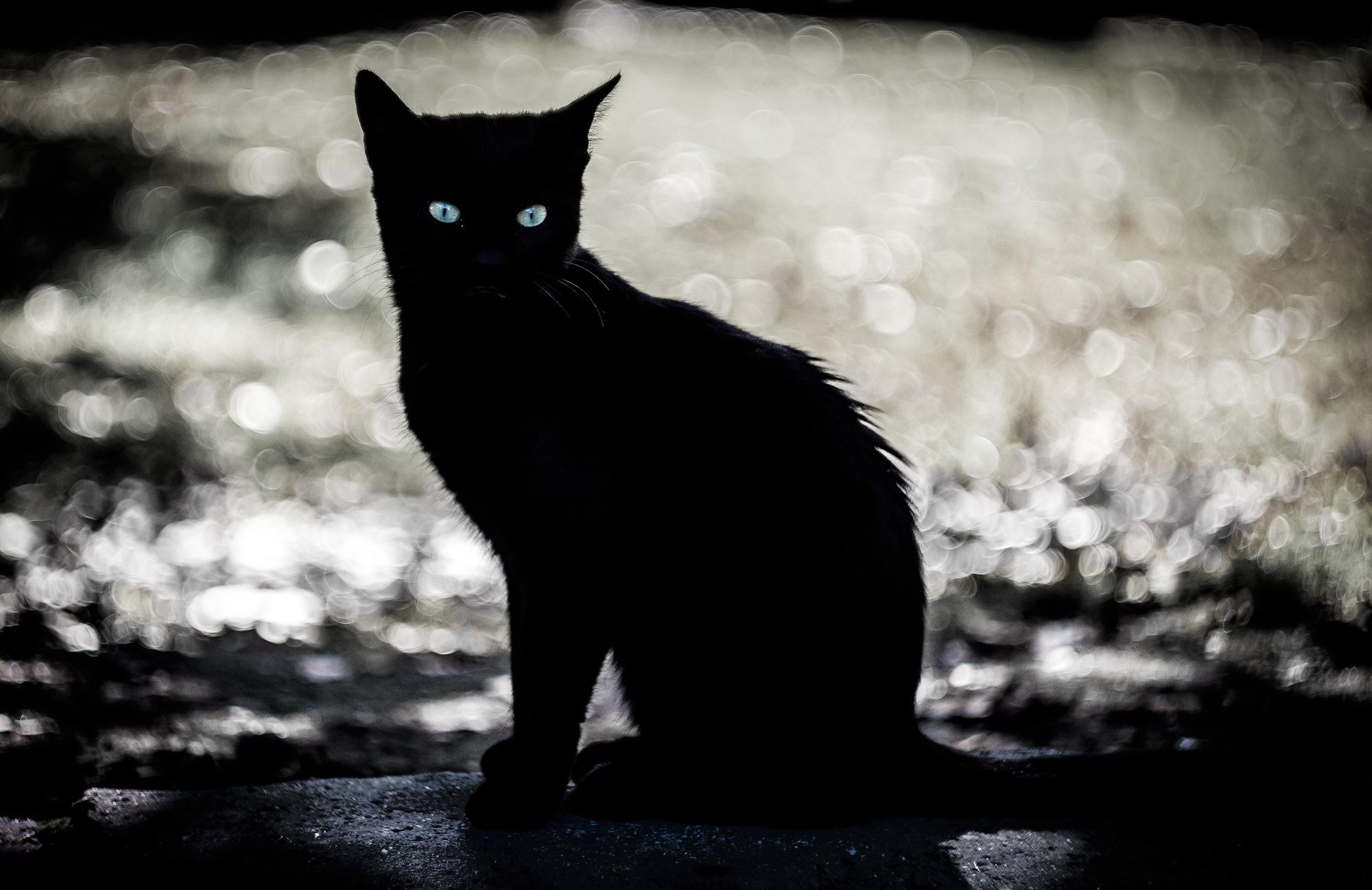 Мрачные картинки с кошками