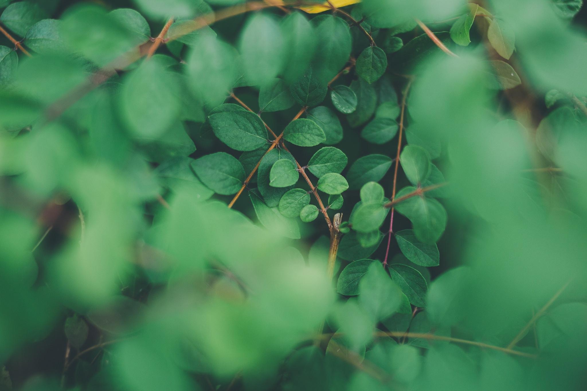Зеленые картинки для твиттера