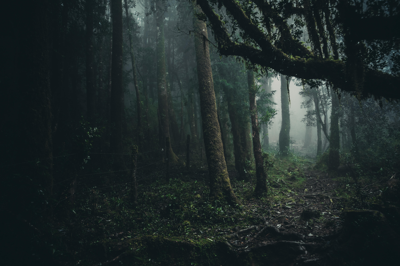 Картинки на рабочий темный лес