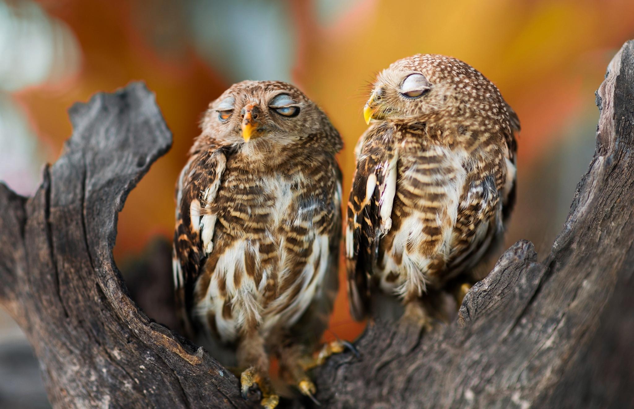 соблюдением уставшие птицы картинка для прогноз