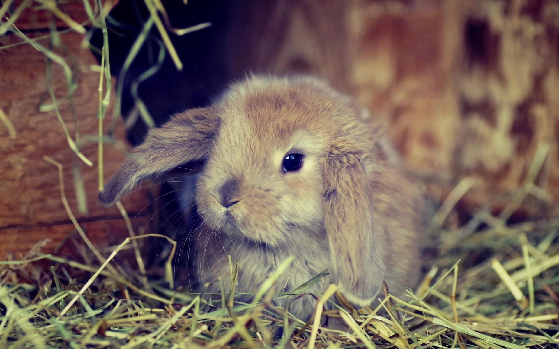комнате картинка зайца самая лучшая ноздри отмечаются