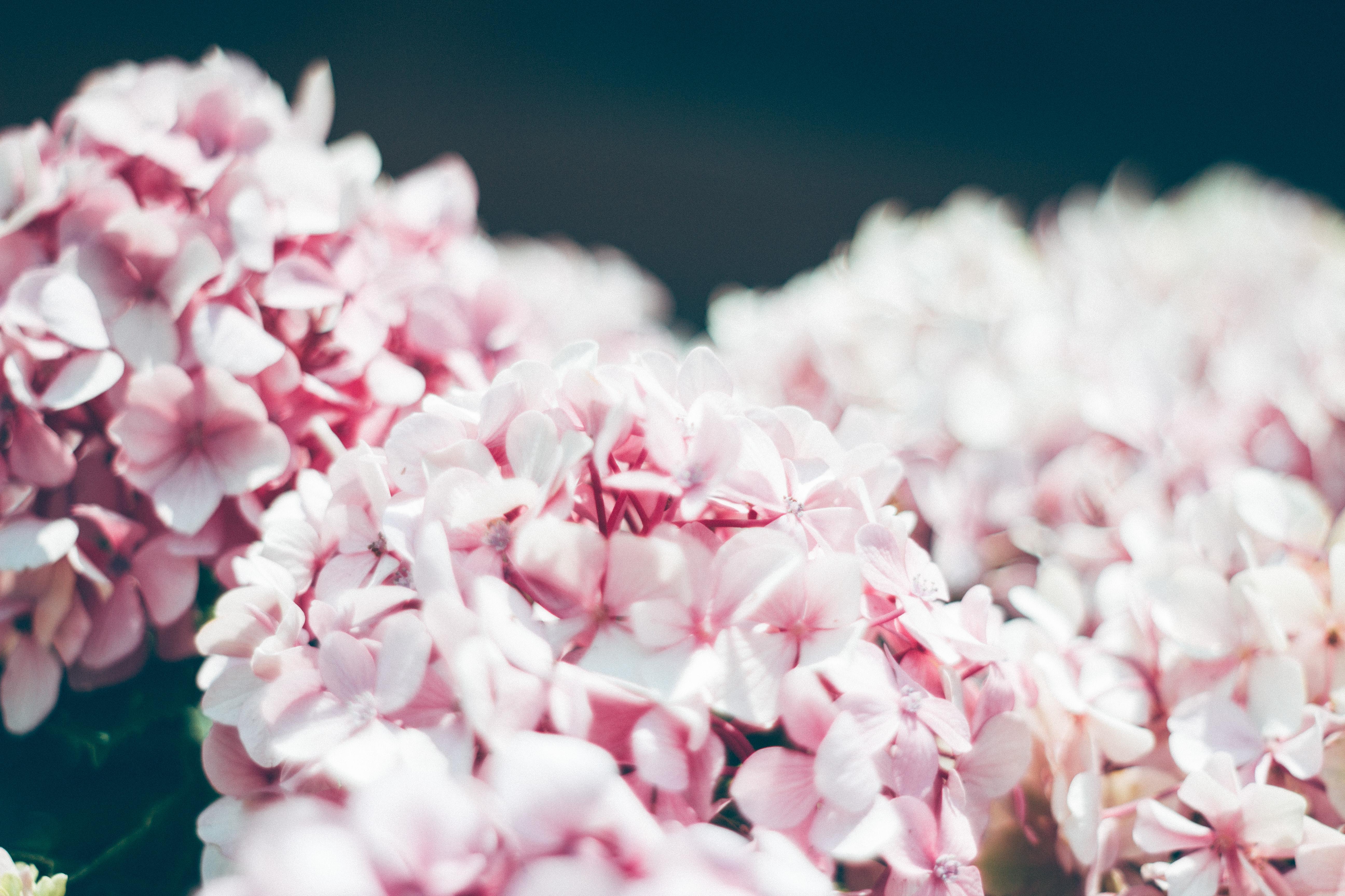 вашим отзывам цветы картинки размер 2048 1152 али считался