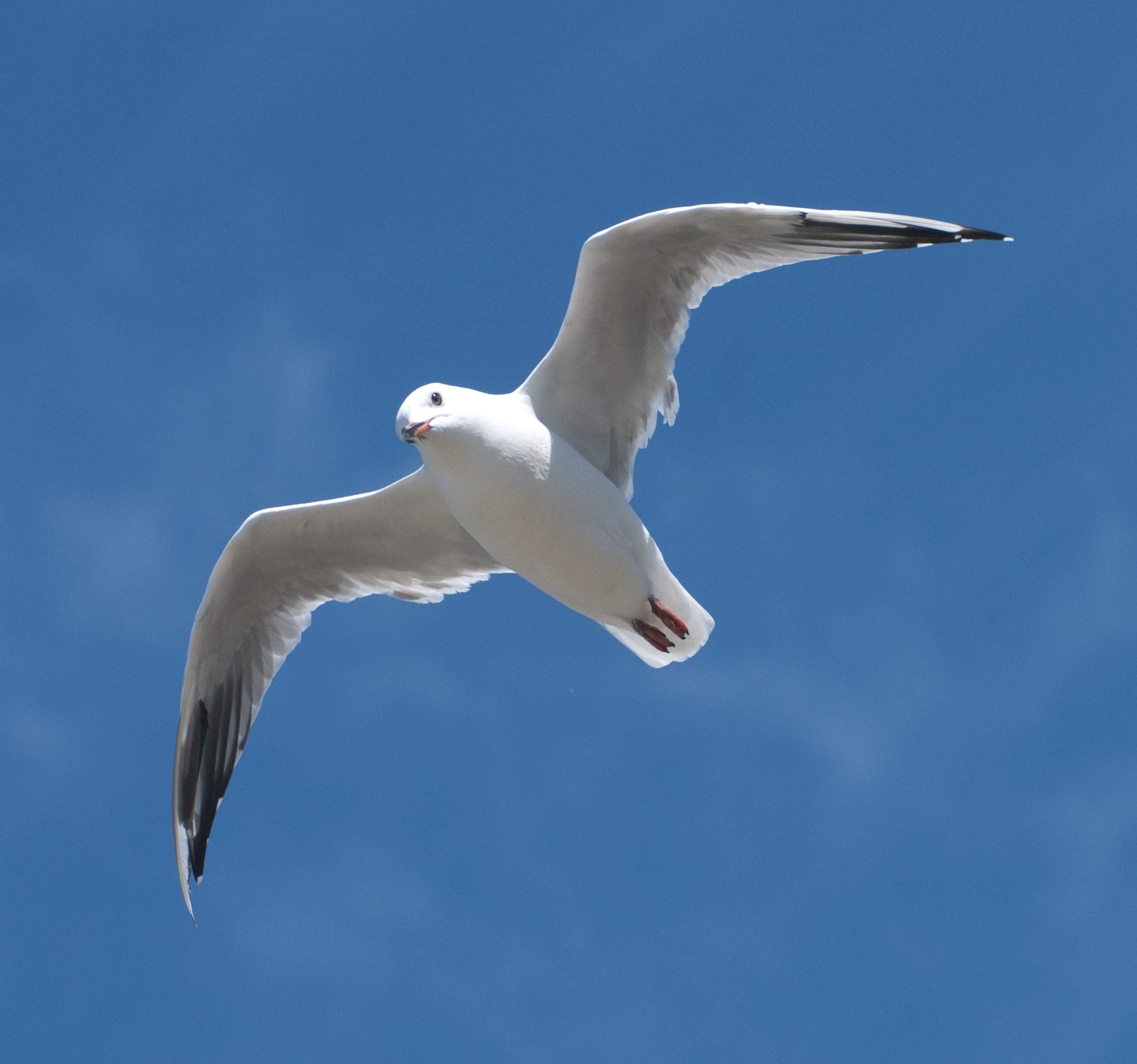 фото морская чайка в полете высокого качества небо лучи