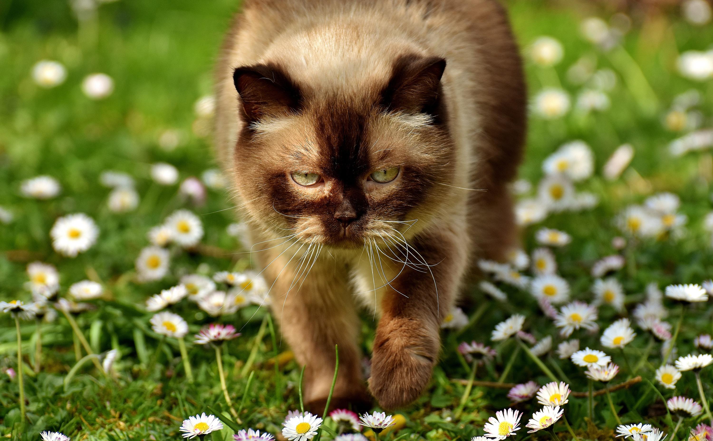 летний кот картинка вам нравится