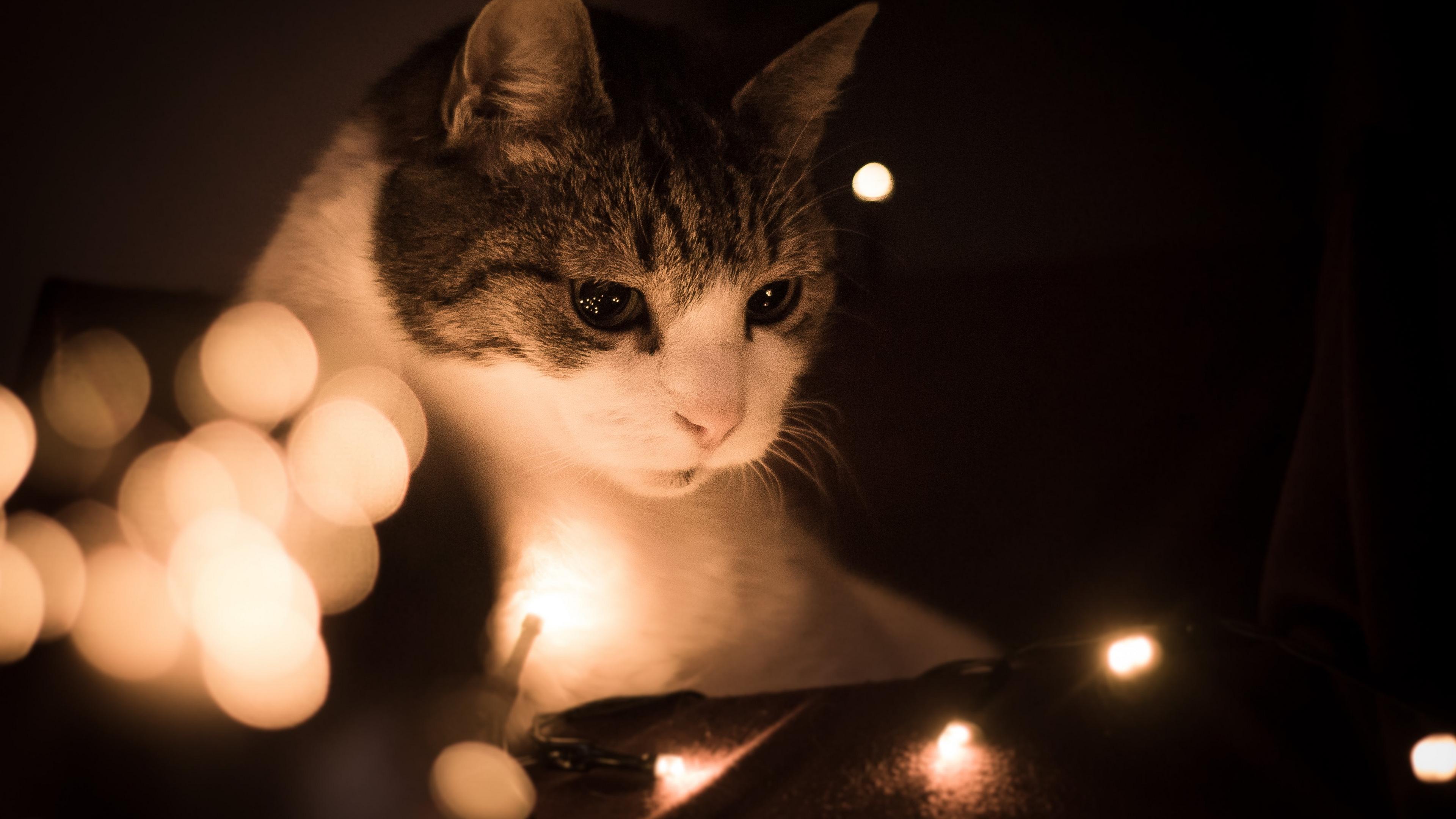 ламповые картинки атмосфера котики недавно