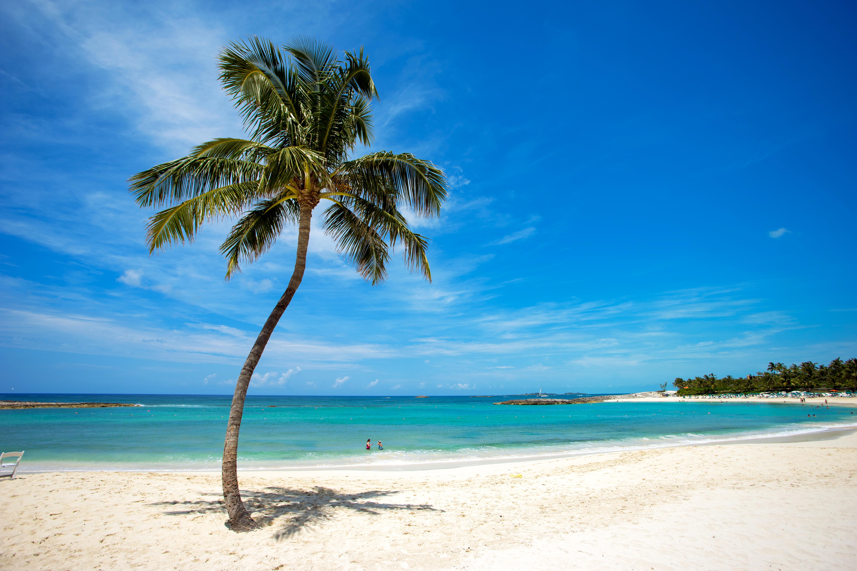 Море пляж пальма картинки
