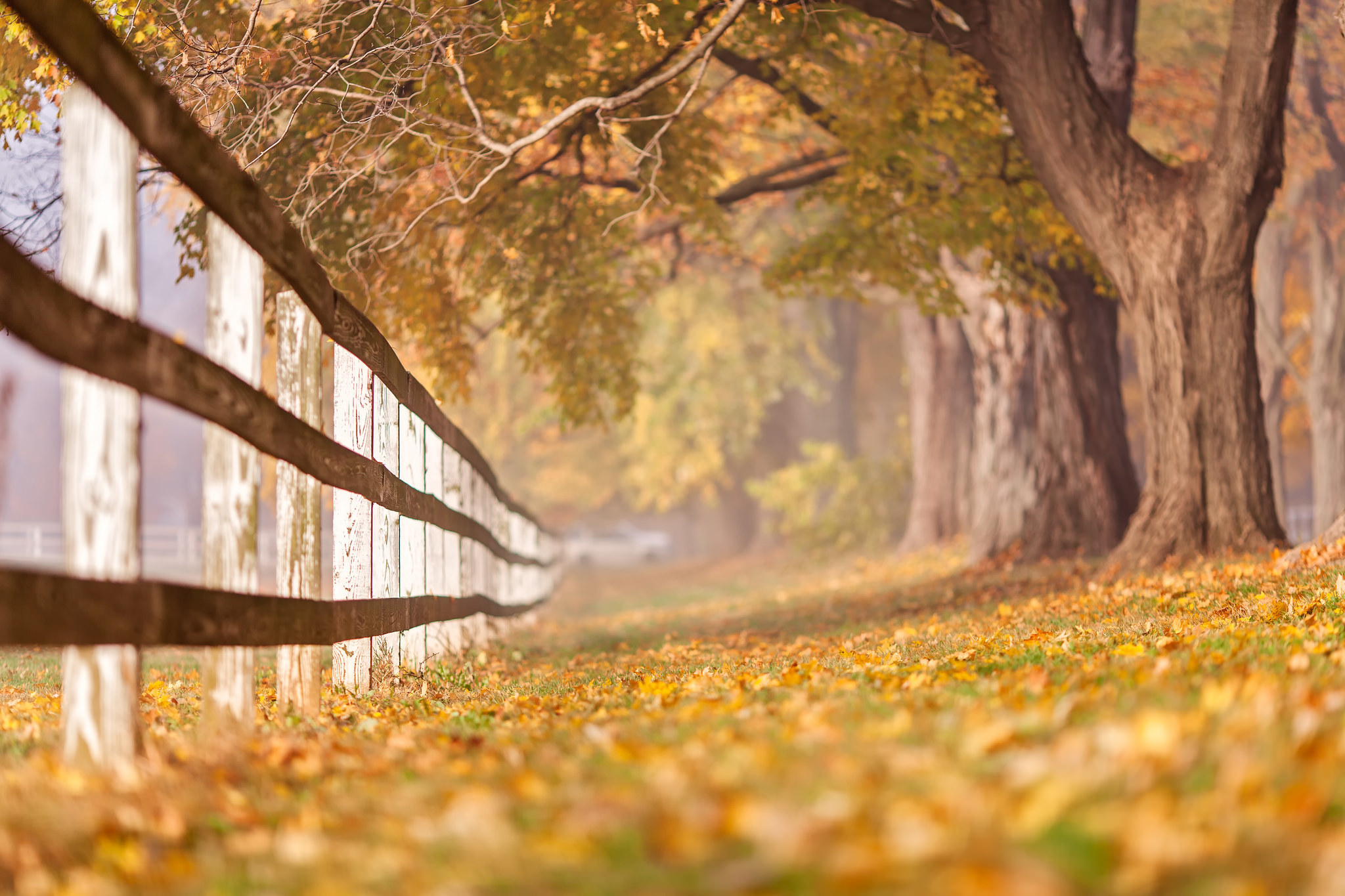 Забор и листья картинки