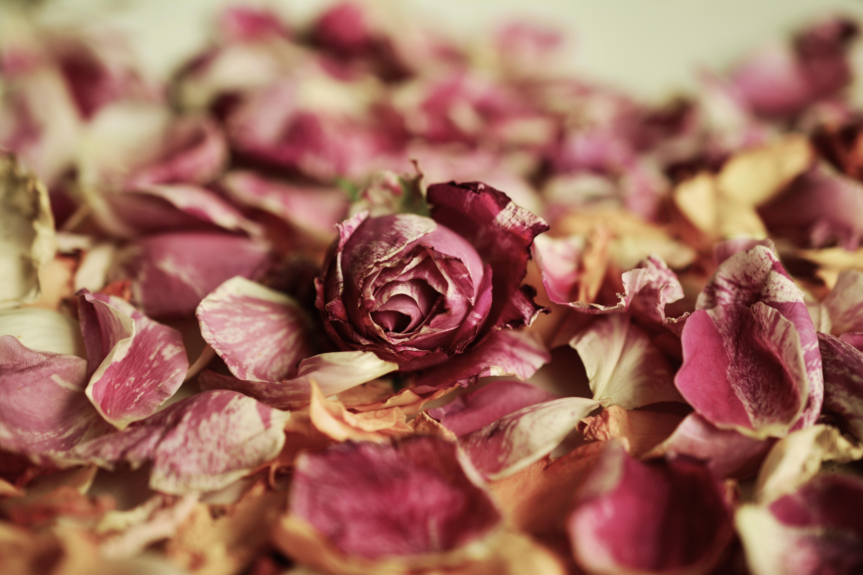 опавшие розы фото этом стиль прихожей