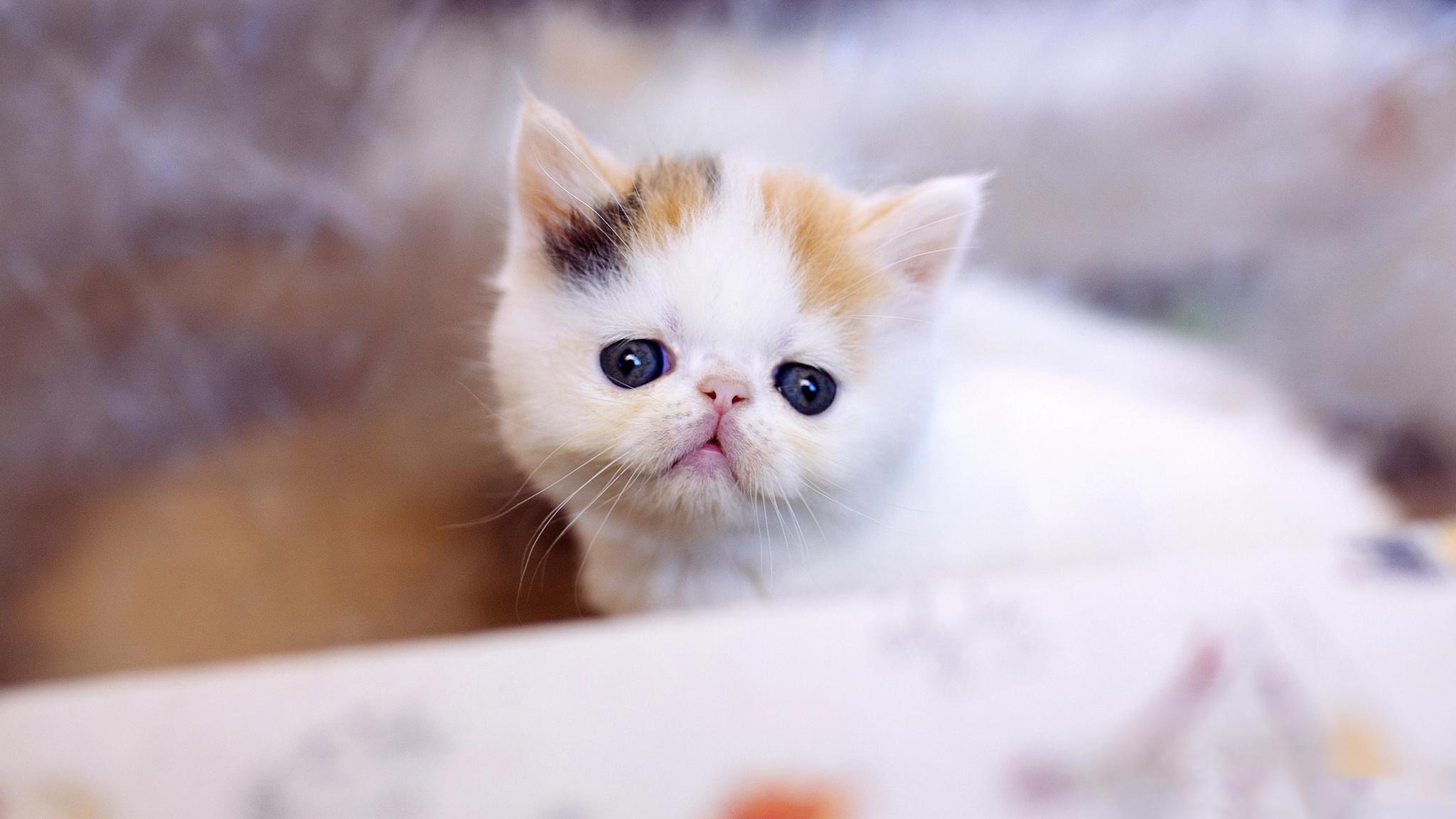 Картинки белых котиков милых и няшных