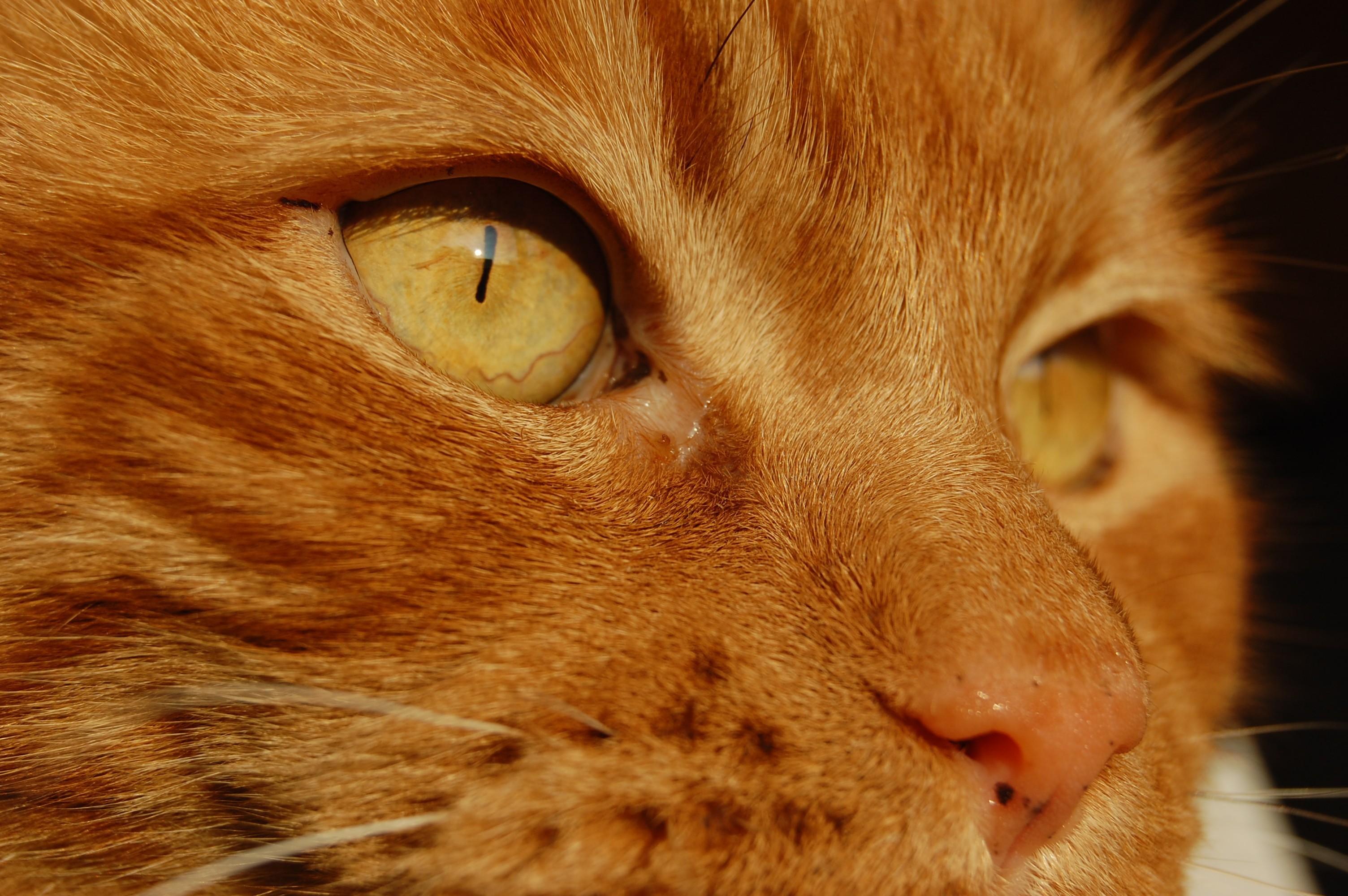 Обои осень, котёнок, желтые глаза, рыжий. Кошки foto 19