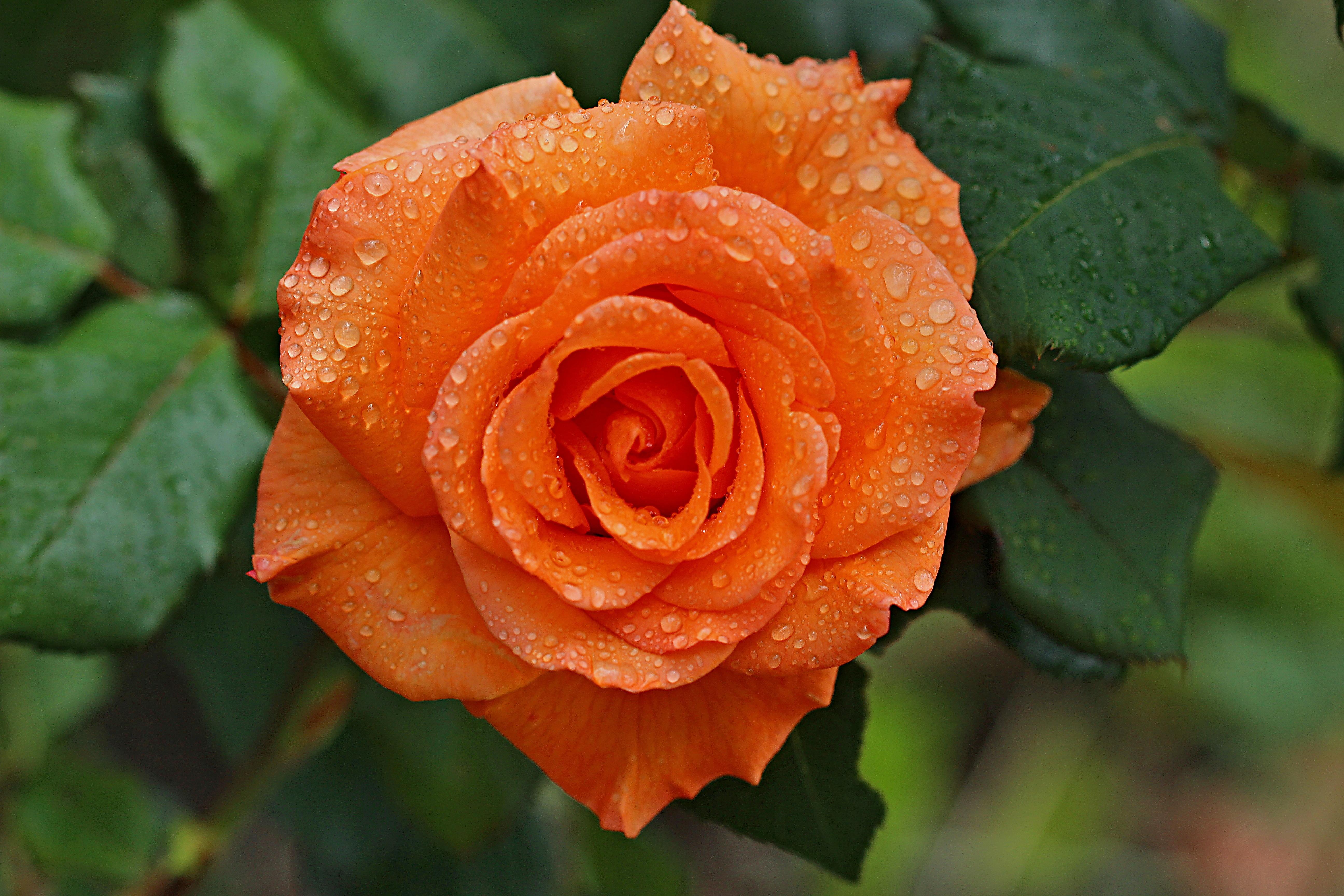 Картинки много цветов красивые священный эдем