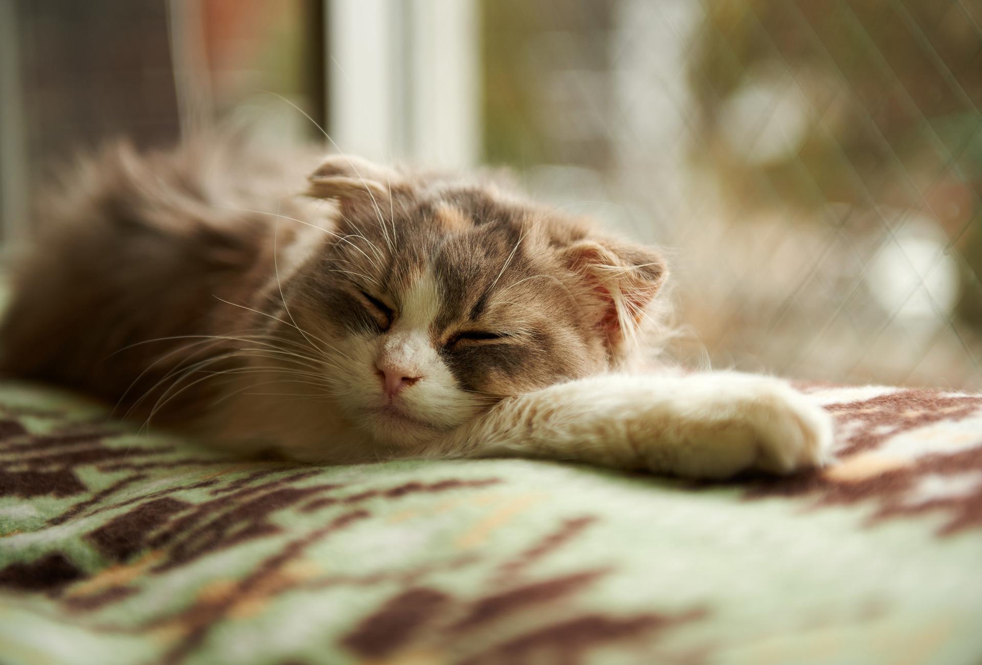 Картинки кот сон