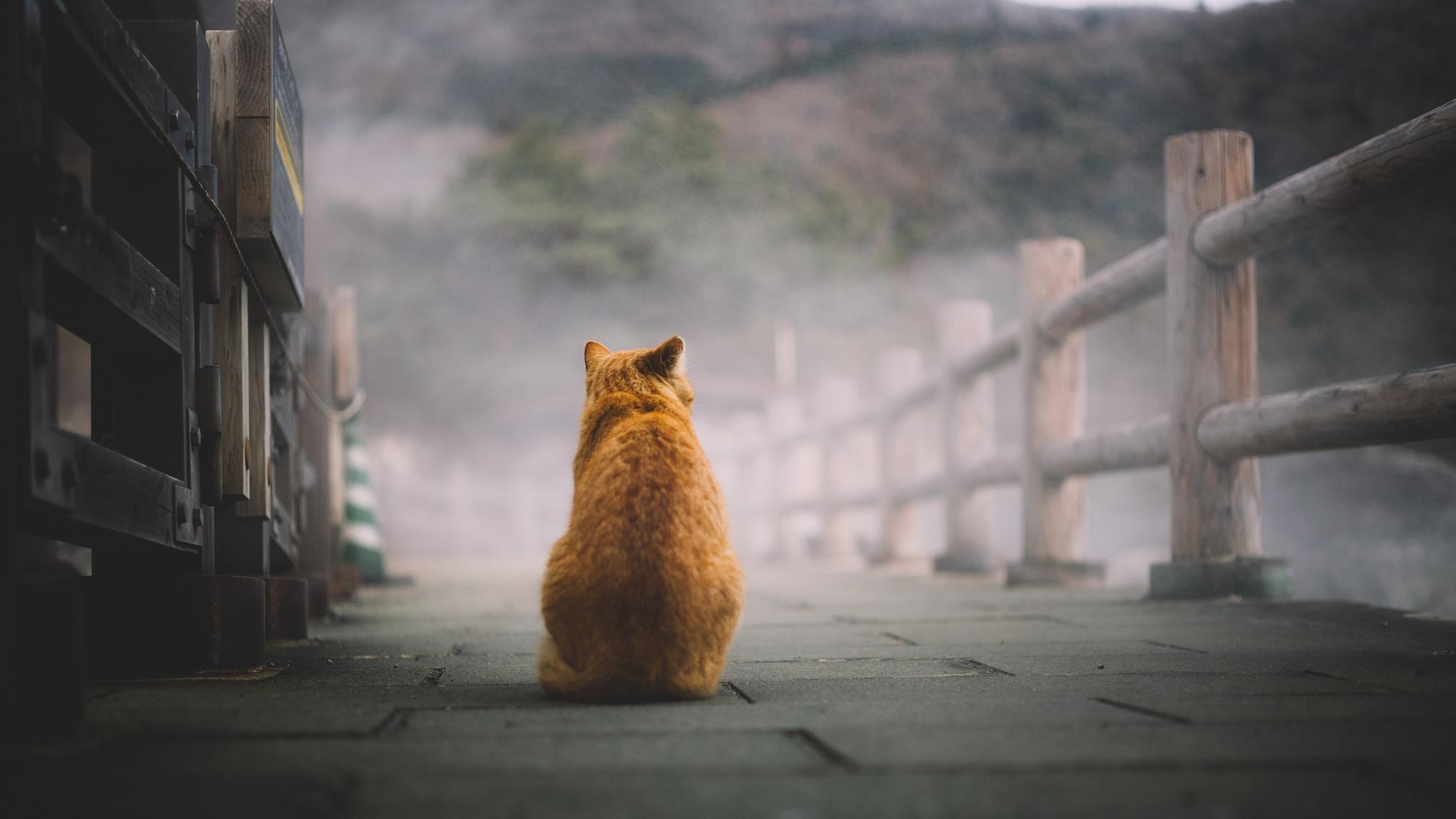 кот смотрит в даль картинки черно белые обои