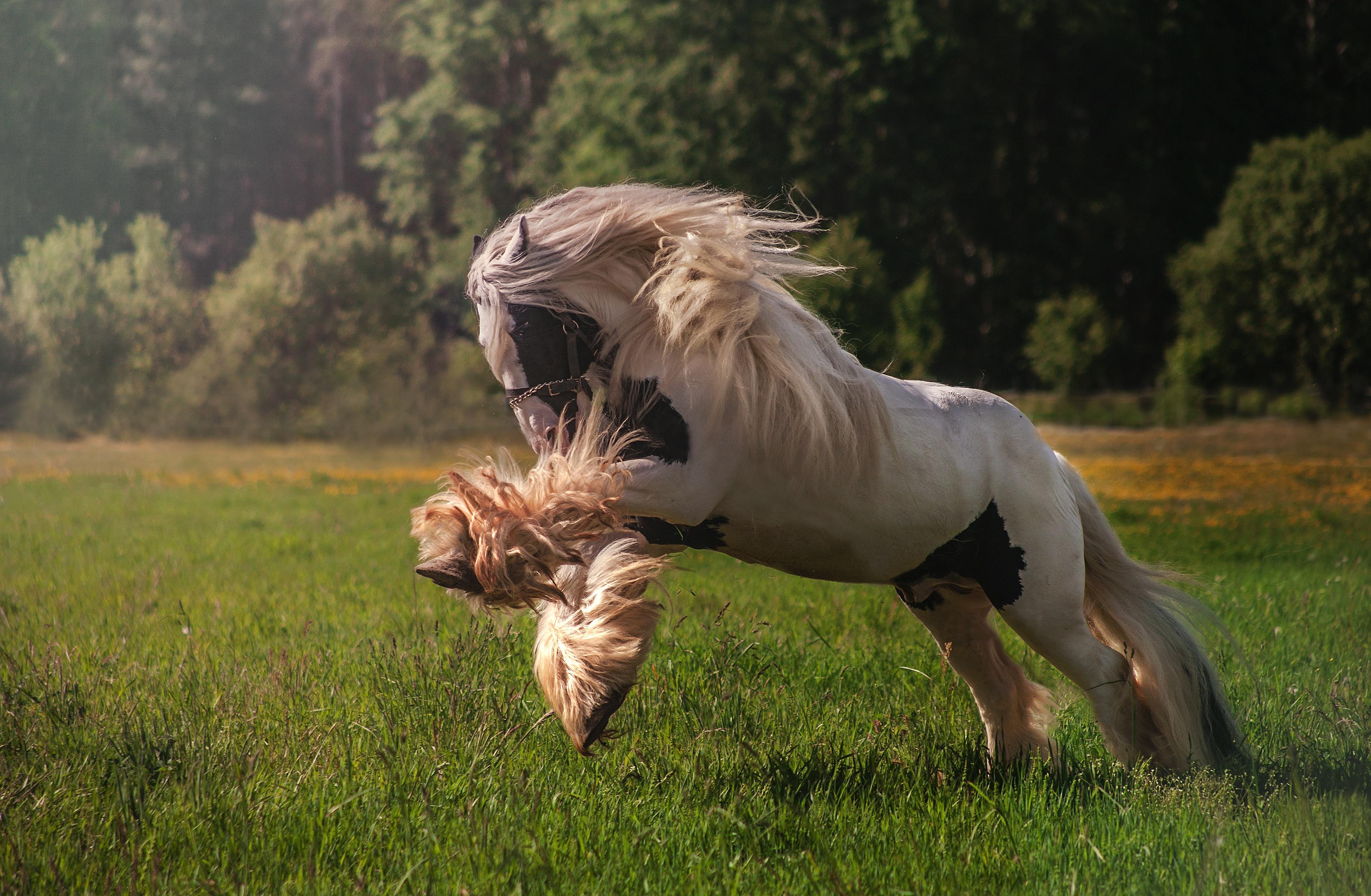 один бегать как лошадь картинки начался недавно, поэтому