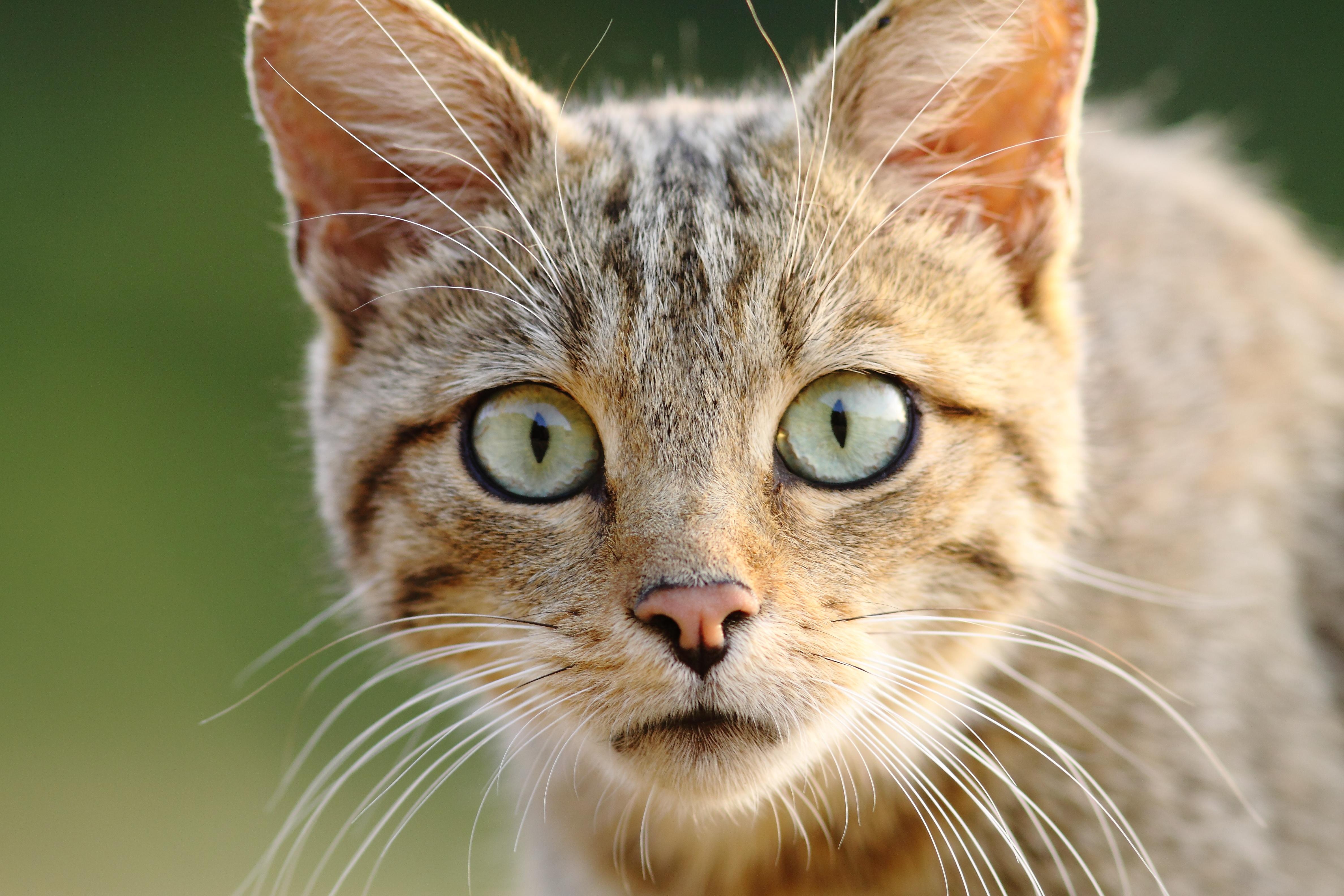 Картинки хитрых котят