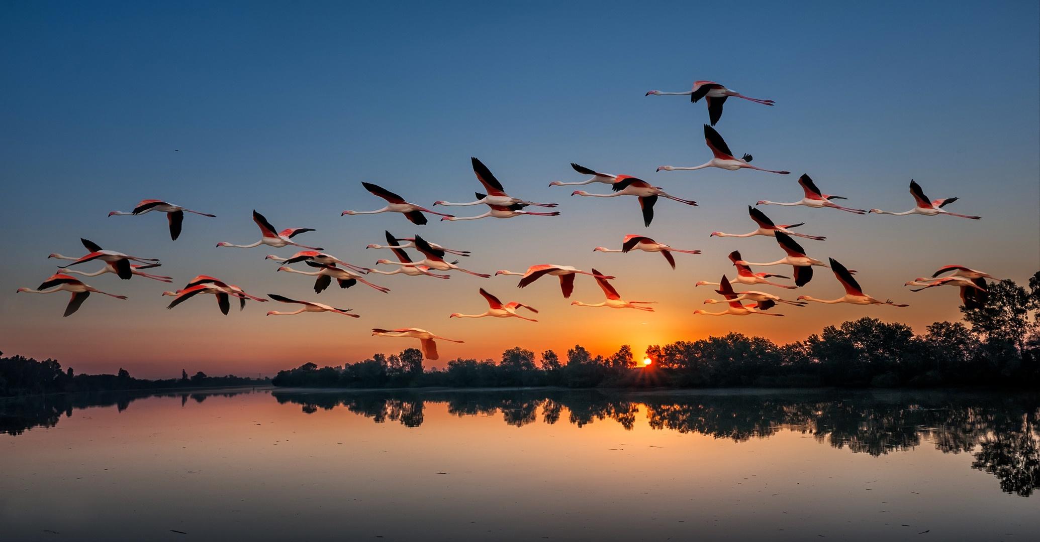 древних красота полета птицы фото является прекрасным