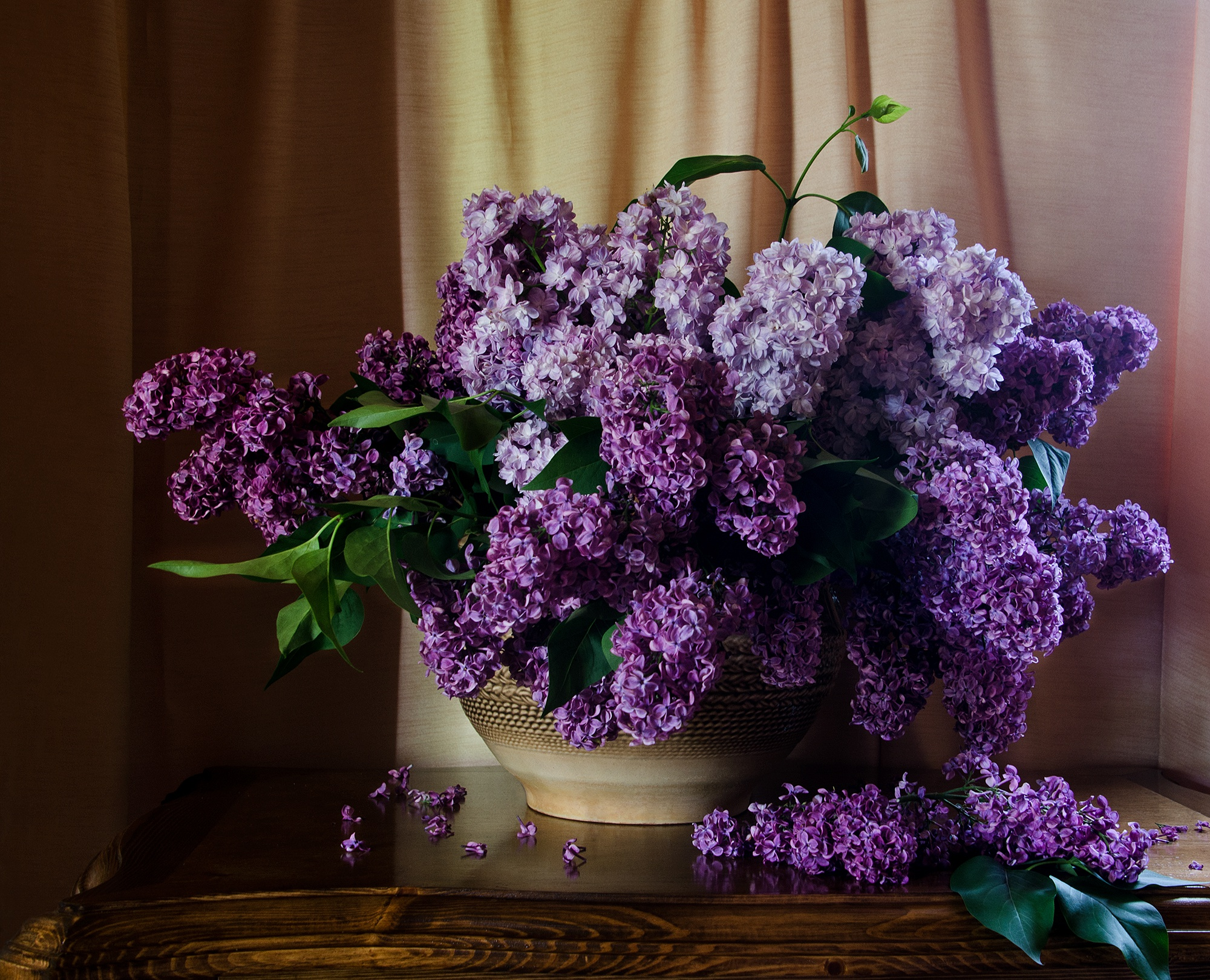 фотографии цветы сирень как