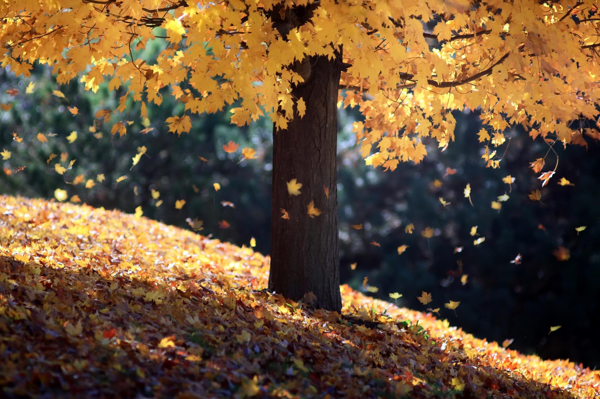 картинки осень листья падают красивые ней юная