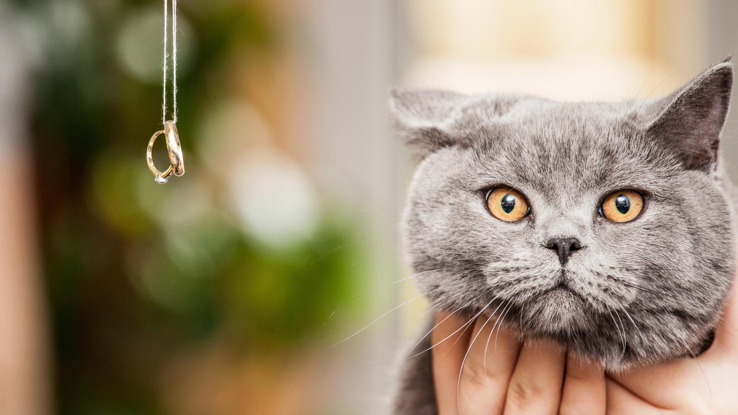 отличные картинки котов исследованием работает
